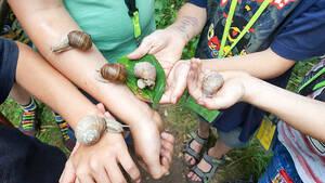 Naturerlebnis: Wie fühlen sich Schnecken auf der Haut an? Foto: R. Welzel, Staakkato Kinder und Jugend e.V.