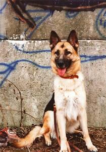 Mit dem Fall der Mauer arbeitslos: Die Mauerhunde wurden an Tierfreunde weitervermittelt. Foto: TVB