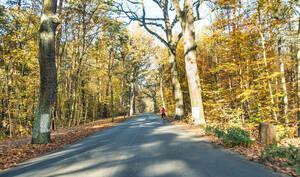 Havelchaussee im Herbst.