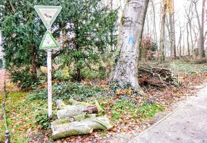 Notwendige Baumfällungen haben im Gemeindewäldchen Spuren hinterlassen. Foto: Dr. Achim Förster