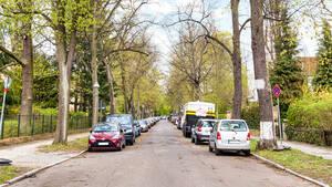 Die ersten Bäume in den Straßen der Villenkolonie Groß Lichterfelde stammten aus der Zucht von John Booth.
