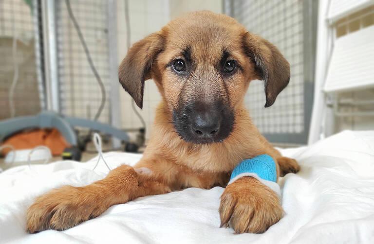 Lulu wurde nur wenige Monate alt. Das Tierheim Berlin klärt mit einer Kampagne über Tierleid beim illegalen Welpenhandel auf. Foto: Tierheim Berlin