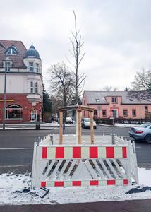 Neupflanzung an der Königstraße.