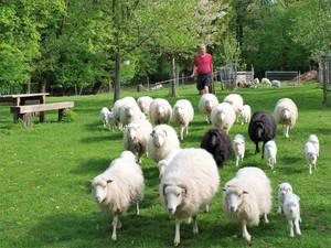 """""""Dranbleiben"""" heißt die Herden-Parole."""