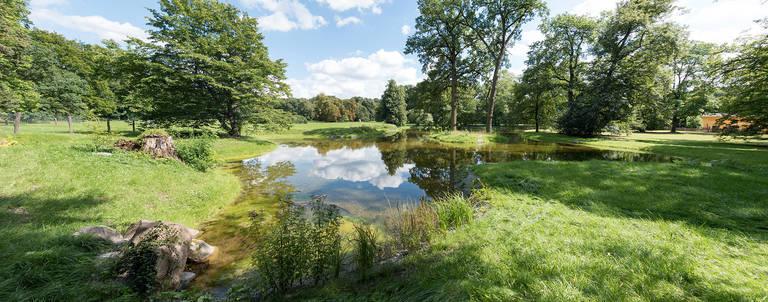 Der erneut angelegte Schloßsee fügt sich mit seiner Insel und dem geschwungenen Ufer perfekt in den Park ein.