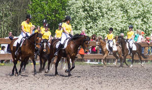 Im KJRV lernen Kinder und Jugendliche alles rund ums Pferd.