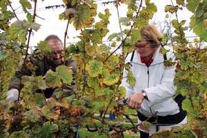 Harald Skär aus Bad Kreuznach und Bezirksbürgermeisterin Angelika bei der Weinlese im Schöneberger Weinberg. Foto: BA