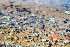 Mikroplastikpartikel finden sich zunehmend auch in deutschen Gewässern. Foto: BAM