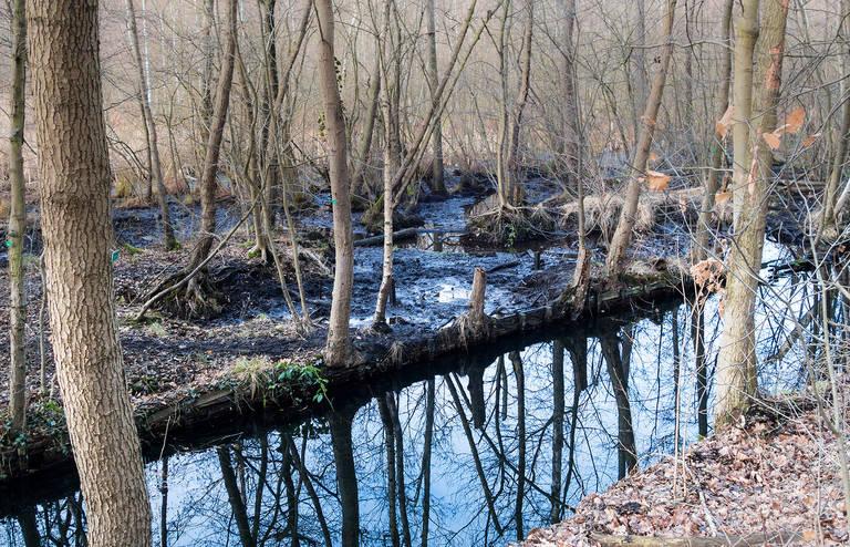 Auf den moorigen Flächen im Langen Luch können seltene Tier- und Pflanzenarten überleben.