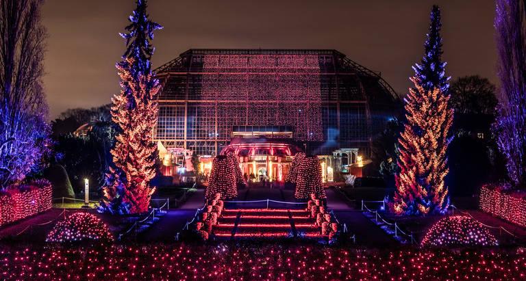 Großes Tropenhaus im Lichterglanz. Foto: Christmas Garden Deutschland