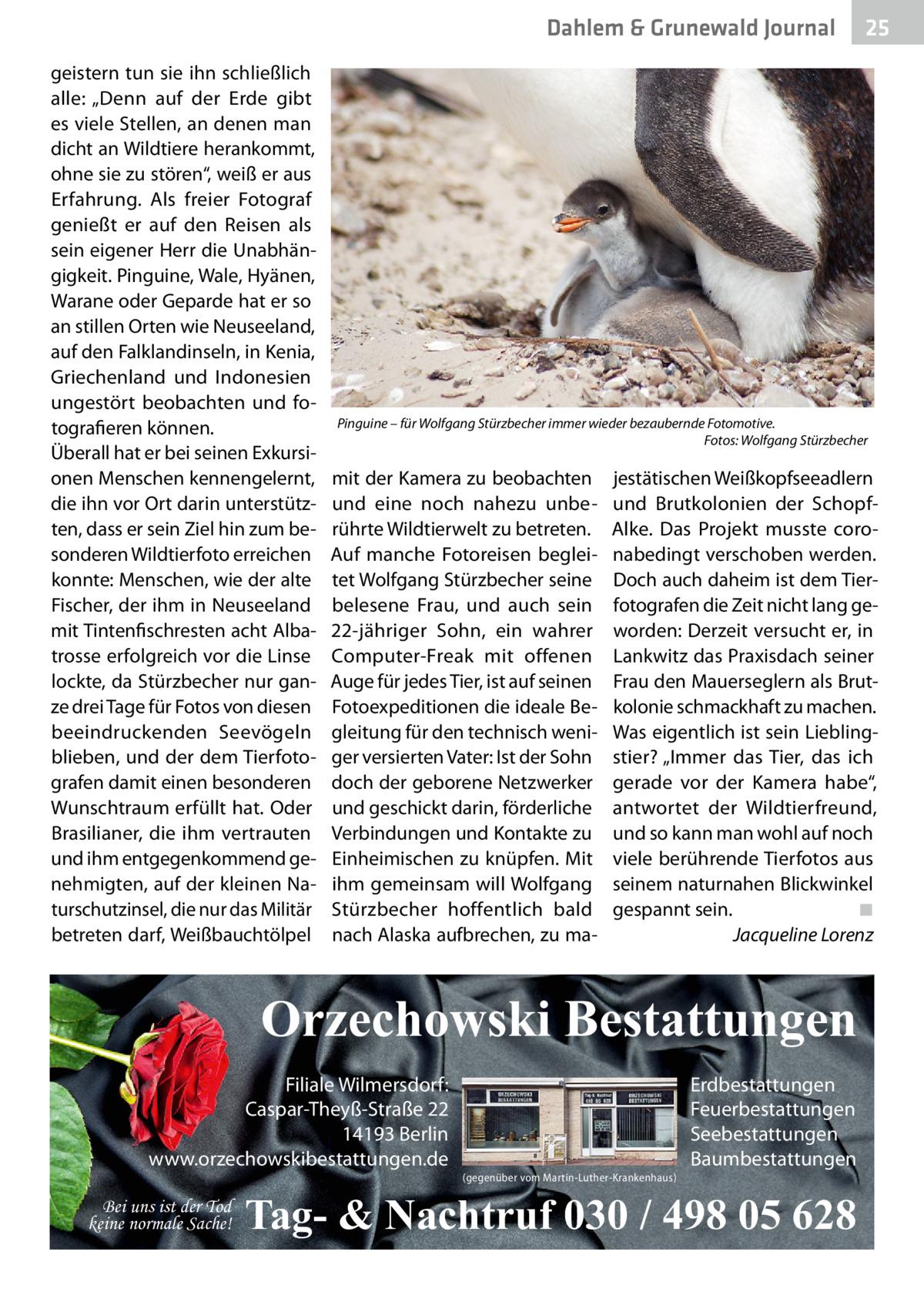 """Dahlem & Grunewald Gesundheit Journal geistern tun sie ihn schließlich alle: """"Denn auf der Erde gibt es viele Stellen, an denen man dicht an Wildtiere herankommt, ohne sie zu stören"""", weiß er aus Erfahrung. Als freier Fotograf genießt er auf den Reisen als sein eigener Herr die Unabhängigkeit. Pinguine, Wale, Hyänen, Warane oder Geparde hat er so an stillen Orten wie Neuseeland, auf den Falklandinseln, in Kenia, Griechenland und Indonesien ungestört beobachten und fotografieren können. Überall hat er bei seinen Exkursionen Menschen kennengelernt, die ihn vor Ort darin unterstützten, dass er sein Ziel hin zum besonderen Wildtierfoto erreichen konnte: Menschen, wie der alte Fischer, der ihm in Neuseeland mit Tintenfischresten acht Albatrosse erfolgreich vor die Linse lockte, da Stürzbecher nur ganze drei Tage für Fotos von diesen beeindruckenden Seevögeln blieben, und der dem Tierfotografen damit einen besonderen Wunschtraum erfüllt hat. Oder Brasilianer, die ihm vertrauten und ihm entgegenkommend genehmigten, auf der kleinen Naturschutzinsel, die nur das Militär betreten darf, Weißbauchtölpel  Pinguine – für Wolfgang Stürzbecher immer wieder bezaubernde Fotomotive. � Fotos: Wolfgang Stürzbecher  mit der Kamera zu beobachten und eine noch nahezu unberührte Wildtierwelt zu betreten. Auf manche Fotoreisen begleitet Wolfgang Stürzbecher seine belesene Frau, und auch sein 22-jähriger Sohn, ein wahrer Computer-Freak mit offenen Auge für jedes Tier, ist auf seinen Fotoexpeditionen die ideale Begleitung für den technisch weniger versierten Vater: Ist der Sohn doch der geborene Netzwerker und geschickt darin, förderliche Verbindungen und Kontakte zu Einheimischen zu knüpfen. Mit ihm gemeinsam will Wolfgang Stürzbecher hoffentlich bald nach Alaska aufbrechen, zu ma jestätischen Weißkopfseeadlern und Brutkolonien der SchopfAlke. Das Projekt musste coronabedingt verschoben werden. Doch auch daheim ist dem Tierfotografen die Zeit nicht lang geworden: Derzeit versucht er, in Lankw"""