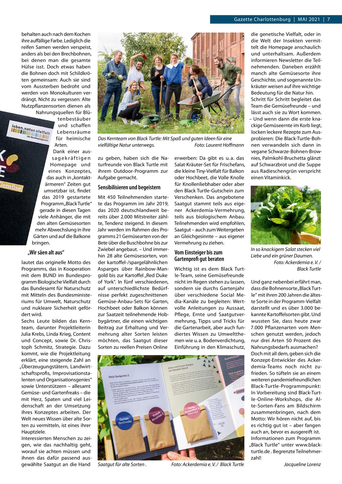 """Gazette Charlottenburg MAI 2021 7 behalten auch nach dem Kochen ihre auffällige Farbe. Lediglich die reifen Samen werden verspeist, anders als bei den Brechbohnen, bei denen man die gesamte Hülse isst. Doch etwas haben die Bohnen doch mit Schildkröten gemeinsam: Auch sie sind vom Aussterben bedroht und werden von Monokulturen verdrängt. Nicht zu vergessen: Alte Nutzpflanzensorten dienen als Nahrungsquellen für Blütenbestäuber und schaffen Lebensräume für heimische Arten. Dank einer aussagekräftigen Homepage und eines Konzeptes, das auch in """"kontaktärmeren"""" Zeiten gut umsetzbar ist, findet das 2019 gestartete Programm """"Black Turtle"""" gerade in diesen Tagen viele Anhänger, die mit den alten Gemüsesorten mehr Abwechslung in ihre Gärten und auf die Balkone bringen.  """"Wir säen alt aus"""" lautet das originelle Motto des Programms, das in Kooperation mit dem BUND im Bundesprogramm Biologische Vielfalt durch das Bundesamt für Naturschutz mit Mitteln des Bundesministeriums für Umwelt, Naturschutz und nukleare Sicherheit gefördert wird. Sechs Leute bilden das Kernteam, darunter Projektleiterin Julia Krebs, Linda Krieg, Content und Concept, sowie Dr. Christoph Schmitz, Strategie. Dazu kommt, wie die Projektleitung erklärt, eine steigende Zahl an """"Überzeugungstätern, Landwirtschaftsprofis, Improvisationstalenten und Organisationsgenies"""" sowie Unterstützern – allesamt Gemüse- und Gartenfreaks – die mit Herz, Spaten und viel Leidenschaft an der Umsetzung ihres Konzeptes arbeiten. Der Welt neues Wissen über alte Sorten zu vermitteln, ist eines ihrer Hauptziele. Interessierten Menschen zu zeigen, wie das nachhaltig geht, worauf sie achten müssen und ihnen das dafür passend ausgewählte Saatgut an die Hand  Das Kernteam von Black Turtle: Mit Spaß und guten Ideen für eine vielfältige Natur unterwegs. Foto: Laurent Hoffmann zu geben, haben sich die Naturfreunde von Black Turtle mit ihrem Outdoor-Programm zur Aufgabe gemacht.  Sensibilisieren und begeistern Mit 450 Teilnehmenden startete d"""