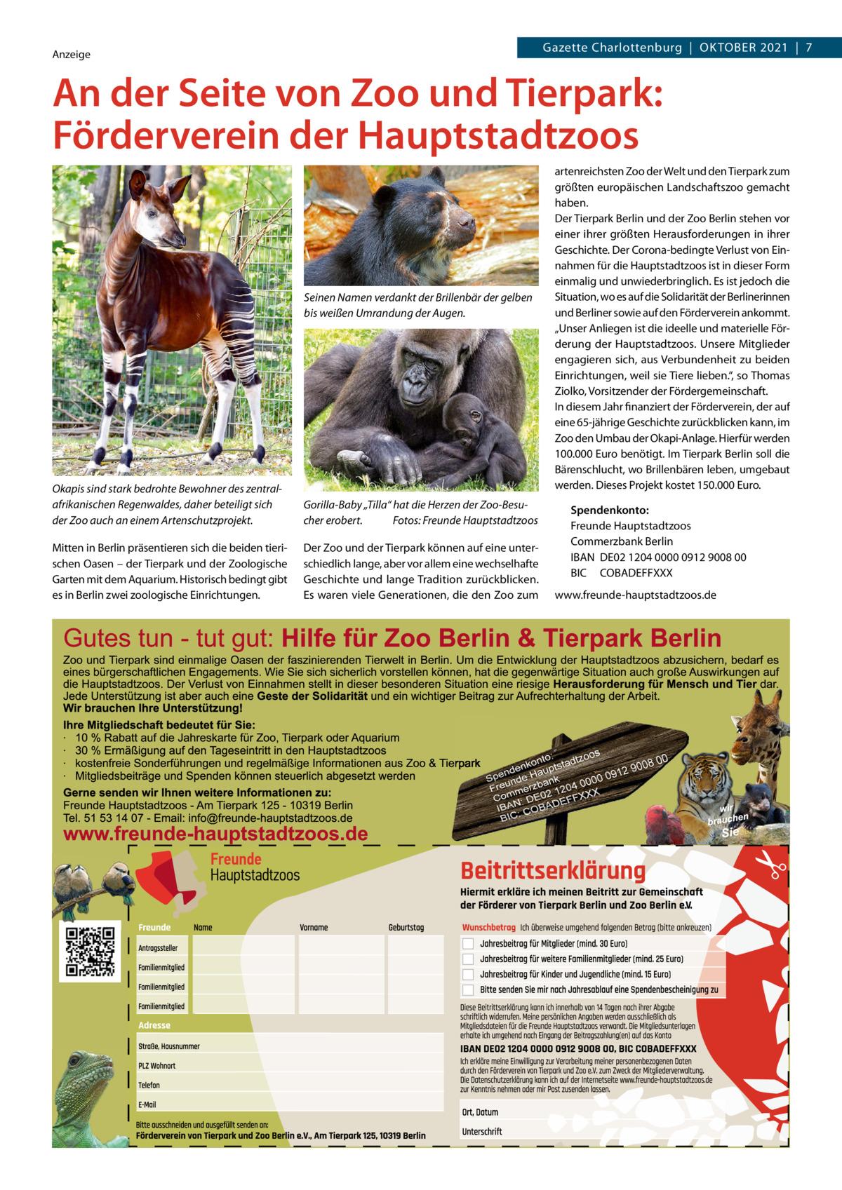 """Gazette Charlottenburg Oktober 2021 7  Anzeige  An der Seite von Zoo und Tierpark: Förderverein der Hauptstadtzoos  Seinen Namen verdankt der Brillenbär der gelben bis weißen Umrandung der Augen.  Okapis sind stark bedrohte Bewohner des zentralafrikanischen Regenwaldes, daher beteiligt sich der Zoo auch an einem Artenschutzprojekt.  Gorilla-Baby """"Tilla"""" hat die Herzen der Zoo-Besucher erobert. Fotos: Freunde Hauptstadtzoos  Mitten in Berlin präsentieren sich die beiden tierischen Oasen – der Tierpark und der Zoologische Garten mit dem Aquarium. Historisch bedingt gibt es in Berlin zwei zoologische Einrichtungen.  Der Zoo und der Tierpark können auf eine unterschiedlich lange, aber vor allem eine wechselhafte Geschichte und lange Tradition zurückblicken. Es waren viele Generationen, die den Zoo zum  artenreichsten Zoo der Welt und den Tierpark zum größten europäischen Landschaftszoo gemacht haben. Der Tierpark Berlin und der Zoo Berlin stehen vor einer ihrer größten Herausforderungen in ihrer Geschichte. Der Corona-bedingte Verlust von Einnahmen für die Hauptstadtzoos ist in dieser Form einmalig und unwiederbringlich. Es ist jedoch die Situation, wo es auf die Solidarität der Berlinerinnen und Berliner sowie auf den Förderverein ankommt. """"Unser Anliegen ist die ideelle und materielle Förderung der Hauptstadtzoos. Unsere Mitglieder engagieren sich, aus Verbundenheit zu beiden Einrichtungen, weil sie Tiere lieben."""", so Thomas Ziolko, Vorsitzender der Fördergemeinschaft. In diesem Jahr finanziert der Förderverein, der auf eine 65-jährige Geschichte zurückblicken kann, im Zoo den Umbau der Okapi-Anlage. Hierfür werden 100.000Euro benötigt. Im Tierpark Berlin soll die Bärenschlucht, wo Brillenbären leben, umgebaut werden. Dieses Projekt kostet 150.000Euro.  Spendenkonto: Freunde Hauptstadtzoos Commerzbank Berlin IBAN DE02 1204 0000 0912 9008 00 BIC COBADEFFXXX www.freunde-hauptstadtzoos.de"""