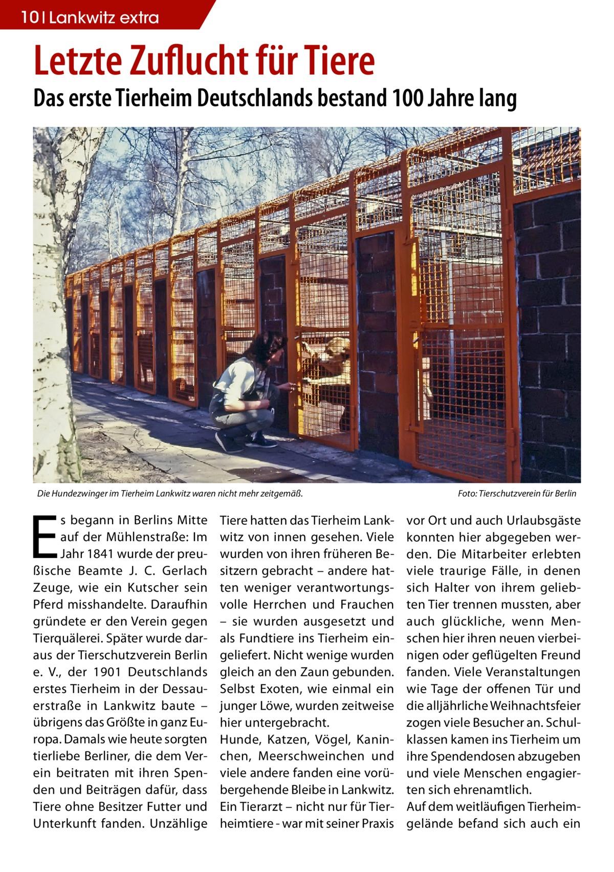 10 Lankwitz extra  Letzte Zuflucht für Tiere  Das erste Tierheim Deutschlands bestand 100 Jahre lang  Die Hundezwinger im Tierheim Lankwitz waren nicht mehr zeitgemäß.�  E  s begann in Berlins Mitte auf der Mühlenstraße: Im Jahr 1841 wurde der preußische Beamte J. C. Gerlach Zeuge, wie ein Kutscher sein Pferd misshandelte. Daraufhin gründete er den Verein gegen Tierquälerei. Später wurde daraus der Tierschutzverein Berlin e. V., der 1901 Deutschlands erstes Tierheim in der Dessauerstraße in Lankwitz baute – übrigens das Größte in ganz Europa. Damals wie heute sorgten tierliebe Berliner, die dem Verein beitraten mit ihren Spenden und Beiträgen dafür, dass Tiere ohne Besitzer Futter und Unterkunft fanden. Unzählige  Tiere hatten das Tierheim Lankwitz von innen gesehen. Viele wurden von ihren früheren Besitzern gebracht – andere hatten weniger verantwortungsvolle Herrchen und Frauchen – sie wurden ausgesetzt und als Fundtiere ins Tierheim eingeliefert. Nicht wenige wurden gleich an den Zaun gebunden. Selbst Exoten, wie einmal ein junger Löwe, wurden zeitweise hier untergebracht. Hunde, Katzen, Vögel, Kaninchen, Meerschweinchen und viele andere fanden eine vorübergehende Bleibe in Lankwitz. Ein Tierarzt – nicht nur für Tierheimtiere - war mit seiner Praxis  Foto: Tierschutzverein für Berlin  vor Ort und auch Urlaubsgäste konnten hier abgegeben werden. Die Mitarbeiter erlebten viele traurige Fälle, in denen sich Halter von ihrem geliebten Tier trennen mussten, aber auch glückliche, wenn Menschen hier ihren neuen vierbeinigen oder geflügelten Freund fanden. Viele Veranstaltungen wie Tage der offenen Tür und die alljährliche Weihnachtsfeier zogen viele Besucher an. Schulklassen kamen ins Tierheim um ihre Spendendosen abzugeben und viele Menschen engagierten sich ehrenamtlich. Auf dem weitläufigen Tierheimgelände befand sich auch ein