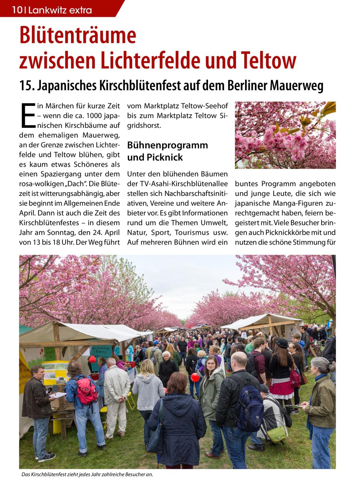 """10 Lankwitz extra  Blütenträume zwischen Lichterfelde und Teltow 15. Japanisches Kirschblütenfest auf dem Berliner Mauerweg  E  in Märchen für kurze Zeit – wenn die ca. 1000 japanischen Kirschbäume auf dem ehemaligen Mauerweg, an der Grenze zwischen Lichterfelde und Teltow blühen, gibt es kaum etwas Schöneres als einen Spaziergang unter dem rosa-wolkigen """"Dach"""". Die Blütezeit ist witterungsabhängig, aber sie beginnt im Allgemeinen Ende April. Dann ist auch die Zeit des Kirschblütenfestes – in diesem Jahr am Sonntag, den 24.April von 13 bis 18Uhr. Der Weg führt  vom Marktplatz Teltow-Seehof bis zum Marktplatz Teltow Sigridshorst.  Bühnenprogramm und Picknick Unter den blühenden Bäumen der TV-Asahi-Kirschblütenallee stellen sich Nachbarschaftsinitiativen, Vereine und weitere Anbieter vor. Es gibt Informationen rund um die Themen Umwelt, Natur, Sport, Tourismus usw. Auf mehreren Bühnen wird ein  Das Kirschblütenfest zieht jedes Jahr zahlreiche Besucher an.  buntes Programm angeboten und junge Leute, die sich wie japanische Manga-Figuren zurechtgemacht haben, feiern begeistert mit. Viele Besucher bringen auch Picknickkörbe mit und nutzen die schöne Stimmung für"""
