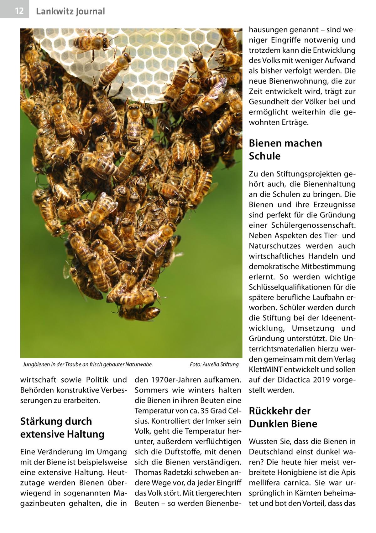 12  Lankwitz Journal hausungen genannt – sind weniger Eingriffe notwenig und trotzdem kann die Entwicklung des Volks mit weniger Aufwand als bisher verfolgt werden. Die neue Bienenwohnung, die zur Zeit entwickelt wird, trägt zur Gesundheit der Völker bei und ermöglicht weiterhin die gewohnten Erträge.  Bienen machen Schule Zu den Stiftungsprojekten gehört auch, die Bienenhaltung an die Schulen zu bringen. Die Bienen und ihre Erzeugnisse sind perfekt für die Gründung einer Schülergenossenschaft. Neben Aspekten des Tier- und Naturschutzes werden auch wirtschaftliches Handeln und demokratische Mitbestimmung erlernt. So werden wichtige Schlüsselqualifikationen für die spätere berufliche Laufbahn erworben. Schüler werden durch die Stiftung bei der Ideenentwicklung, Umsetzung und Gründung unterstützt. Die Unterrichtsmaterialien hierzu werden gemeinsam mit dem Verlag Jungbienen in der Traube an frisch gebauter Naturwabe.� Foto: Aurelia Stiftung KlettMINT entwickelt und sollen wirtschaft sowie Politik und den 1970er-Jahren aufkamen. auf der Didactica 2019 vorgeBehörden konstruktive Verbes- Sommers wie winters halten stellt werden. serungen zu erarbeiten. die Bienen in ihren Beuten eine Temperatur von ca. 35Grad Cel- Rückkehr der sius. Kontrolliert der Imker sein Dunklen Biene Stärkung durch Volk, geht die Temperatur herextensive Haltung unter, außerdem verflüchtigen Wussten Sie, dass die Bienen in Eine Veränderung im Umgang sich die Duftstoffe, mit denen Deutschland einst dunkel wamit der Biene ist beispielsweise sich die Bienen verständigen. ren? Die heute hier meist vereine extensive Haltung. Heut- Thomas Radetzki schweben an- breitete Honigbiene ist die Apis zutage werden Bienen über- dere Wege vor, da jeder Eingriff mellifera carnica. Sie war urwiegend in sogenannten Ma- das Volk stört. Mit tiergerechten sprünglich in Kärnten beheimagazinbeuten gehalten, die in Beuten – so werden Bienenbe- tet und bot den Vorteil, dass das