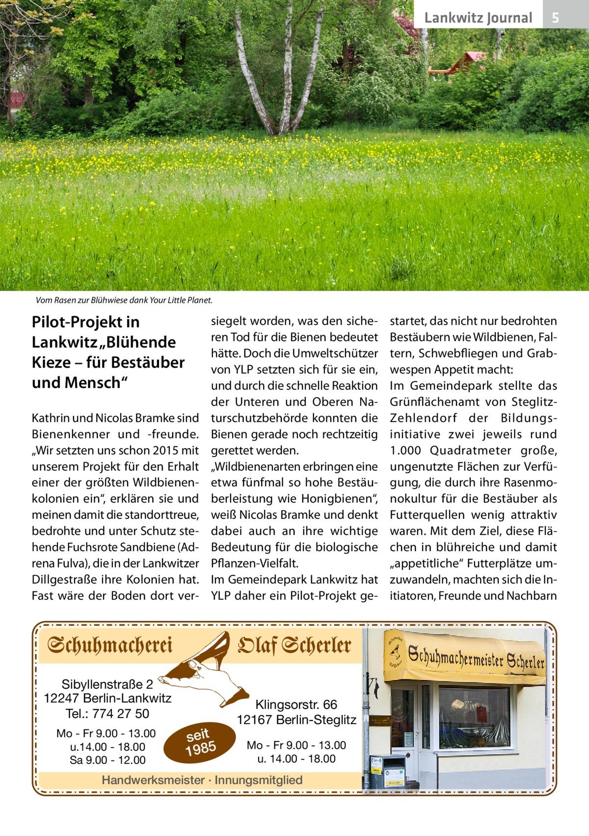 """Lankwitz Journal  5  Vom Rasen zur Blühwiese dank Your Little Planet.  Pilot-Projekt in Lankwitz """"Blühende Kieze – für Bestäuber und Mensch"""" Kathrin und Nicolas Bramke sind Bienenkenner und -freunde. """"Wir setzten uns schon 2015 mit unserem Projekt für den Erhalt einer der größten Wildbienenkolonien ein"""", erklären sie und meinen damit die standorttreue, bedrohte und unter Schutz stehende Fuchsrote Sandbiene (Adrena Fulva), die in der Lankwitzer Dillgestraße ihre Kolonien hat. Fast wäre der Boden dort ver siegelt worden, was den sicheren Tod für die Bienen bedeutet hätte. Doch die Umweltschützer von YLP setzten sich für sie ein, und durch die schnelle Reaktion der Unteren und Oberen Naturschutzbehörde konnten die Bienen gerade noch rechtzeitig gerettet werden. """"Wildbienenarten erbringen eine etwa fünfmal so hohe Bestäuberleistung wie Honigbienen"""", weiß Nicolas Bramke und denkt dabei auch an ihre wichtige Bedeutung für die biologische Pflanzen-Vielfalt. Im Gemeindepark Lankwitz hat YLP daher ein Pilot-Projekt ge Sibyllenstraße 2 12247 Berlin-Lankwitz Tel.: 774 27 50 Mo - Fr 9.00 - 13.00 u.14.00 - 18.00 Sa 9.00 - 12.00  seit 1985  Klingsorstr. 66 12167 Berlin-Steglitz Mo - Fr 9.00 - 13.00 u. 14.00 - 18.00  Handwerksmeister · Innungsmitglied  startet, das nicht nur bedrohten Bestäubern wie Wildbienen, Faltern, Schwebfliegen und Grabwespen Appetit macht: Im Gemeindepark stellte das Grünflächenamt von SteglitzZehlendorf der Bildungsinitiative zwei jeweils rund 1.000 Quadratmeter große, ungenutzte Flächen zur Verfügung, die durch ihre Rasenmonokultur für die Bestäuber als Futterquellen wenig attraktiv waren. Mit dem Ziel, diese Flächen in blühreiche und damit """"appetitliche"""" Futterplätze umzuwandeln, machten sich die Initiatoren, Freunde und Nachbarn"""