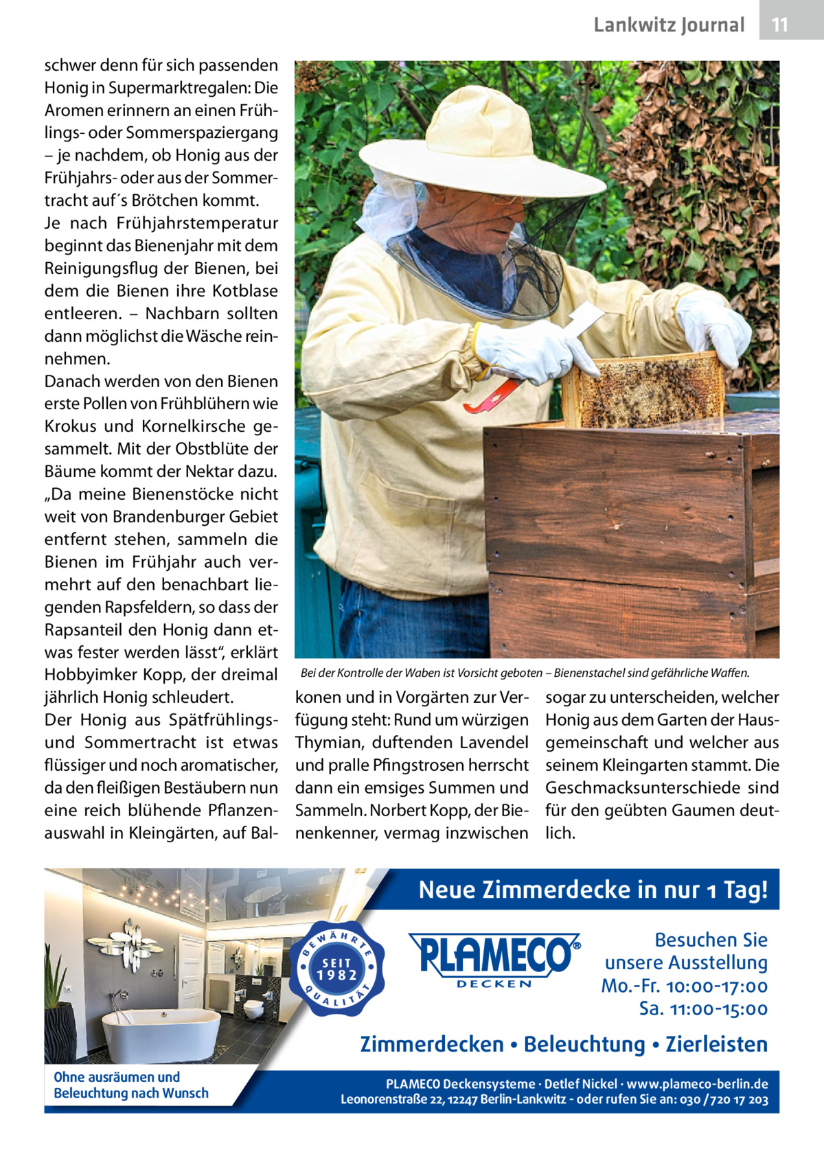 """Lankwitz Gesundheit Journal schwer denn für sich passenden Honig in Supermarktregalen: Die Aromen erinnern an einen Frühlings- oder Sommerspaziergang – je nachdem, ob Honig aus der Frühjahrs- oder aus der Sommertracht auf´s Brötchen kommt. Je nach Frühjahrstemperatur beginnt das Bienenjahr mit dem Reinigungsflug der Bienen, bei dem die Bienen ihre Kotblase entleeren. – Nachbarn sollten dann möglichst die Wäsche reinnehmen. Danach werden von den Bienen erste Pollen von Frühblühern wie Krokus und Kornelkirsche gesammelt. Mit der Obstblüte der Bäume kommt der Nektar dazu. """"Da meine Bienenstöcke nicht weit von Brandenburger Gebiet entfernt stehen, sammeln die Bienen im Frühjahr auch vermehrt auf den benachbart liegenden Rapsfeldern, so dass der Rapsanteil den Honig dann etwas fester werden lässt"""", erklärt Hobbyimker Kopp, der dreimal jährlich Honig schleudert. Der Honig aus Spätfrühlingsund Sommertracht ist etwas flüssiger und noch aromatischer, da den fleißigen Bestäubern nun eine reich blühende Pflanzenauswahl in Kleingärten, auf Bal Bei der Kontrolle der Waben ist Vorsicht geboten – Bienenstachel sind gefährliche Waffen.  konen und in Vorgärten zur Verfügung steht: Rund um würzigen Thymian, duftenden Lavendel und pralle Pfingstrosen herrscht dann ein emsiges Summen und Sammeln. Norbert Kopp, der Bienenkenner, vermag inzwischen  sogar zu unterscheiden, welcher Honig aus dem Garten der Hausgemeinschaft und welcher aus seinem Kleingarten stammt. Die Geschmacksunterschiede sind für den geübten Gaumen deutlich.  Neue Zimmerdecke in nur 1 Tag! Besuchen Sie unsere Ausstellung Mo.-Fr. 10:00-17:00 Sa. 11:00-15:00  Zimmerdecken • Beleuchtung • Zierleisten Ohne ausräumen und Beleuchtung nach Wunsch  11 11  PLAMECO Deckensysteme ∙ Detlef Nickel ∙ www.plameco-berlin.de Leonorenstraße 22, 12247 Berlin-Lankwitz - oder rufen Sie an: 030 /720 17 203"""