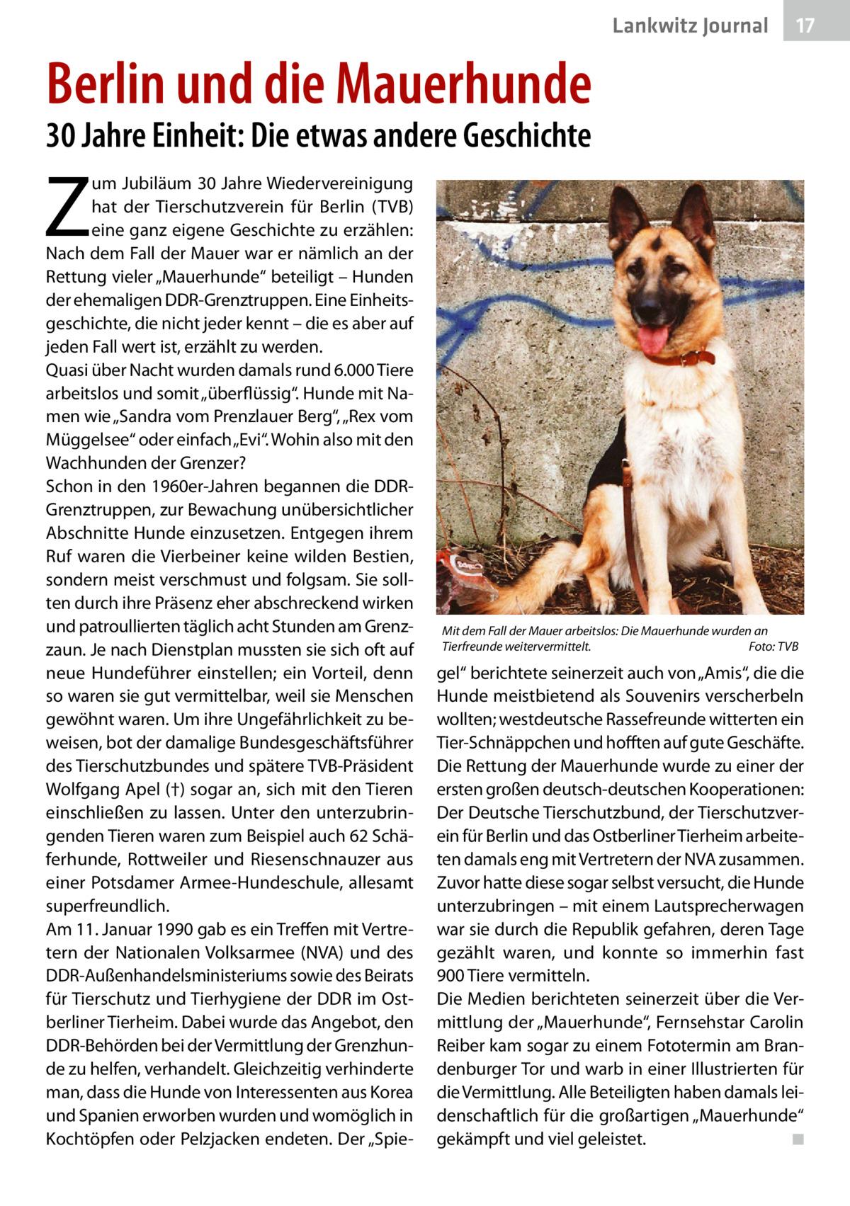 """Lankwitz Journal  17  Berlin und die Mauerhunde 30Jahre Einheit: Die etwas andere Geschichte  Z  um Jubiläum 30Jahre Wiedervereinigung hat der Tierschutzverein für Berlin (TVB) eine ganz eigene Geschichte zu erzählen: Nach dem Fall der Mauer war er nämlich an der Rettung vieler """"Mauerhunde"""" beteiligt – Hunden der ehemaligen DDR-Grenztruppen. Eine Einheitsgeschichte, die nicht jeder kennt – die es aber auf jeden Fall wert ist, erzählt zu werden. Quasi über Nacht wurden damals rund 6.000Tiere arbeitslos und somit """"überflüssig"""". Hunde mit Namen wie """"Sandra vom Prenzlauer Berg"""", """"Rex vom Müggelsee"""" oder einfach """"Evi"""". Wohin also mit den Wachhunden der Grenzer? Schon in den 1960er-Jahren begannen die DDRGrenztruppen, zur Bewachung unübersichtlicher Abschnitte Hunde einzusetzen. Entgegen ihrem Ruf waren die Vierbeiner keine wilden Bestien, sondern meist verschmust und folgsam. Sie sollten durch ihre Präsenz eher abschreckend wirken und patroullierten täglich acht Stunden am Grenzzaun. Je nach Dienstplan mussten sie sich oft auf neue Hundeführer einstellen; ein Vorteil, denn so waren sie gut vermittelbar, weil sie Menschen gewöhnt waren. Um ihre Ungefährlichkeit zu beweisen, bot der damalige Bundesgeschäftsführer des Tierschutzbundes und spätere TVB-Präsident Wolfgang Apel(†) sogar an, sich mit den Tieren einschließen zu lassen. Unter den unterzubringenden Tieren waren zum Beispiel auch 62Schäferhunde, Rottweiler und Riesenschnauzer aus einer Potsdamer Armee-Hundeschule, allesamt superfreundlich. Am 11.Januar 1990 gab es ein Treffen mit Vertretern der Nationalen Volksarmee (NVA) und des DDR-Außenhandelsministeriums sowie des Beirats für Tierschutz und Tierhygiene der DDR im Ostberliner Tierheim. Dabei wurde das Angebot, den DDR-Behörden bei der Vermittlung der Grenzhunde zu helfen, verhandelt. Gleichzeitig verhinderte man, dass die Hunde von Interessenten aus Korea und Spanien erworben wurden und womöglich in Kochtöpfen oder Pelzjacken endeten. Der """"Spie Mit dem Fall der M"""