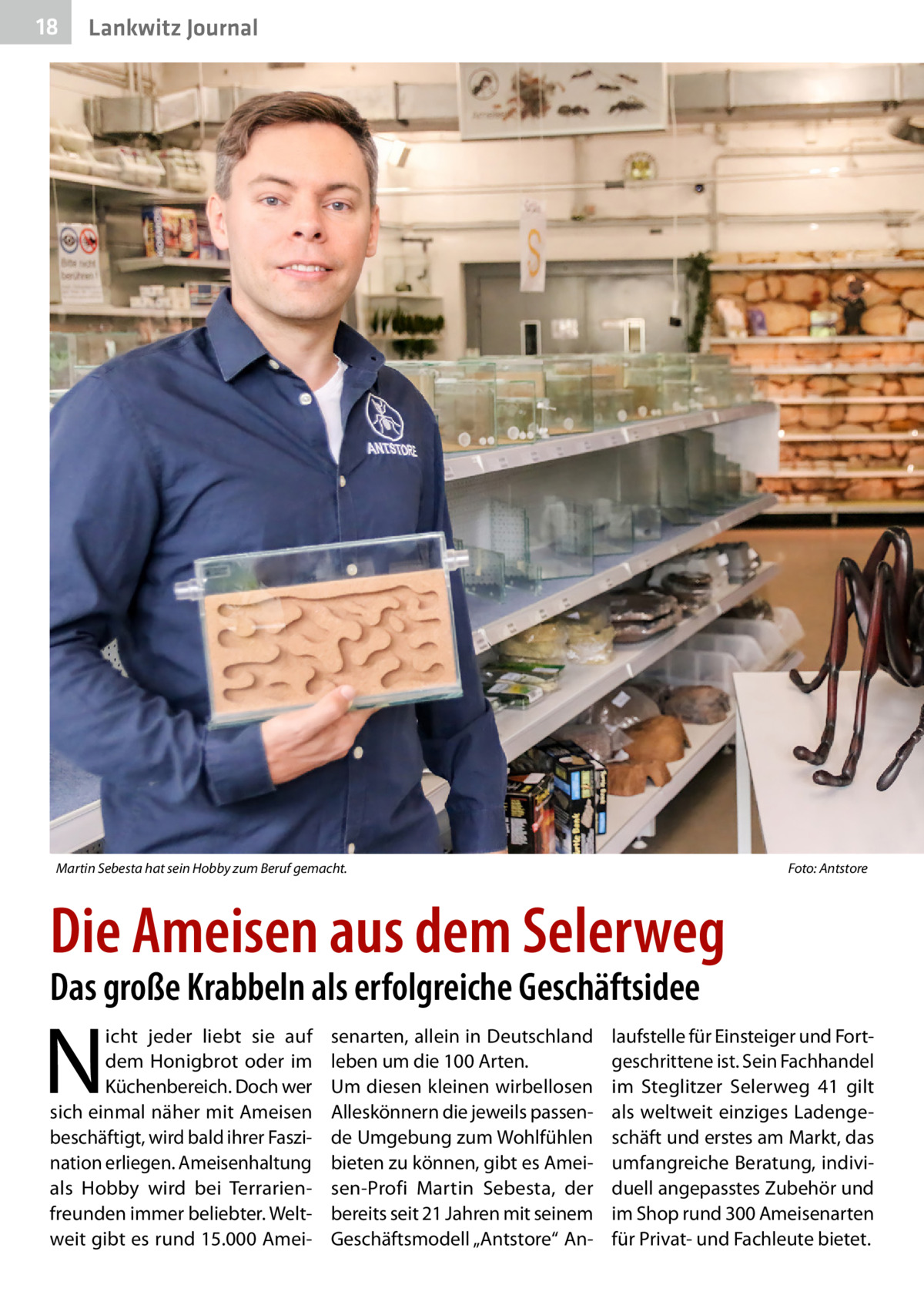 """18  Lankwitz Journal  Martin Sebesta hat sein Hobby zum Beruf gemacht.�  Foto: Antstore  Die Ameisen aus dem Selerweg Das große Krabbeln als erfolgreiche Geschäftsidee  N  icht jeder liebt sie auf dem Honigbrot oder im Küchenbereich. Doch wer sich einmal näher mit Ameisen beschäftigt, wird bald ihrer Faszination erliegen. Ameisenhaltung als Hobby wird bei Terrarienfreunden immer beliebter. Weltweit gibt es rund 15.000 Amei senarten, allein in Deutschland leben um die 100 Arten. Um diesen kleinen wirbellosen Alleskönnern die jeweils passende Umgebung zum Wohlfühlen bieten zu können, gibt es Ameisen-Profi Martin Sebesta, der bereits seit 21Jahren mit seinem Geschäftsmodell """"Antstore"""" An laufstelle für Einsteiger und Fortgeschrittene ist. Sein Fachhandel im Steglitzer Selerweg 41 gilt als weltweit einziges Ladengeschäft und erstes am Markt, das umfangreiche Beratung, individuell angepasstes Zubehör und im Shop rund 300 Ameisenarten für Privat- und Fachleute bietet."""