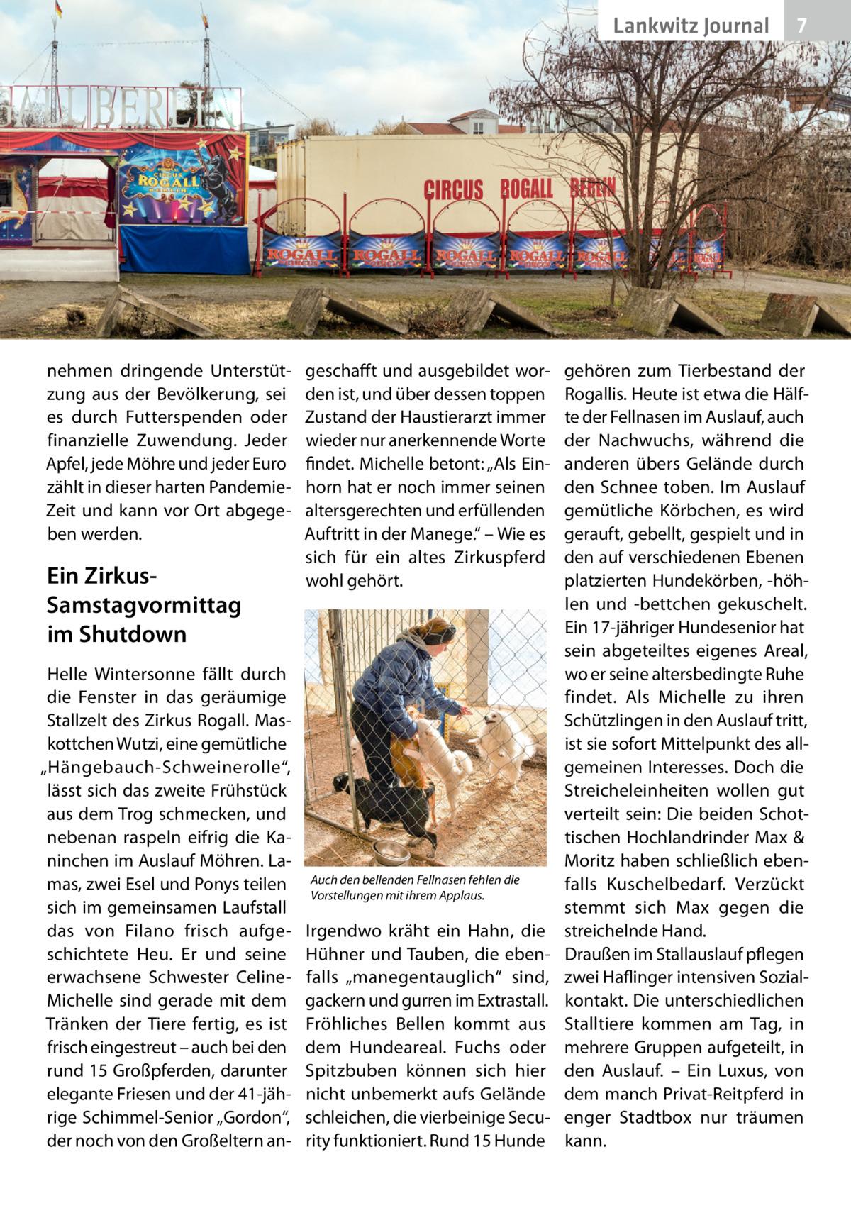 """Lankwitz Gesundheit Journal  nehmen dringende Unterstützung aus der Bevölkerung, sei es durch Futterspenden oder finanzielle Zuwendung. Jeder Apfel, jede Möhre und jeder Euro zählt in dieser harten PandemieZeit und kann vor Ort abgegeben werden.  Ein ZirkusSamstagvormittag im Shutdown Helle Wintersonne fällt durch die Fenster in das geräumige Stallzelt des Zirkus Rogall. Maskottchen Wutzi, eine gemütliche """"Hängebauch-Schweinerolle"""", lässt sich das zweite Frühstück aus dem Trog schmecken, und nebenan raspeln eifrig die Kaninchen im Auslauf Möhren. Lamas, zwei Esel und Ponys teilen sich im gemeinsamen Laufstall das von Filano frisch aufgeschichtete Heu. Er und seine erwachsene Schwester CelineMichelle sind gerade mit dem Tränken der Tiere fertig, es ist frisch eingestreut – auch bei den rund 15Großpferden, darunter elegante Friesen und der 41-jährige Schimmel-Senior """"Gordon"""", der noch von den Großeltern an geschafft und ausgebildet worden ist, und über dessen toppen Zustand der Haustierarzt immer wieder nur anerkennende Worte findet. Michelle betont: """"Als Einhorn hat er noch immer seinen altersgerechten und erfüllenden Auftritt in der Manege."""" – Wie es sich für ein altes Zirkuspferd wohl gehört.  Auch den bellenden Fellnasen fehlen die Vorstellungen mit ihrem Applaus.  Irgendwo kräht ein Hahn, die Hühner und Tauben, die ebenfalls """"manegentauglich"""" sind, gackern und gurren im Extrastall. Fröhliches Bellen kommt aus dem Hundeareal. Fuchs oder Spitzbuben können sich hier nicht unbemerkt aufs Gelände schleichen, die vierbeinige Security funktioniert. Rund 15Hunde  7 7  gehören zum Tierbestand der Rogallis. Heute ist etwa die Hälfte der Fellnasen im Auslauf, auch der Nachwuchs, während die anderen übers Gelände durch den Schnee toben. Im Auslauf gemütliche Körbchen, es wird gerauft, gebellt, gespielt und in den auf verschiedenen Ebenen platzierten Hundekörben, -höhlen und -bettchen gekuschelt. Ein 17-jähriger Hundesenior hat sein abgeteiltes eigenes Areal, wo er seine alte"""