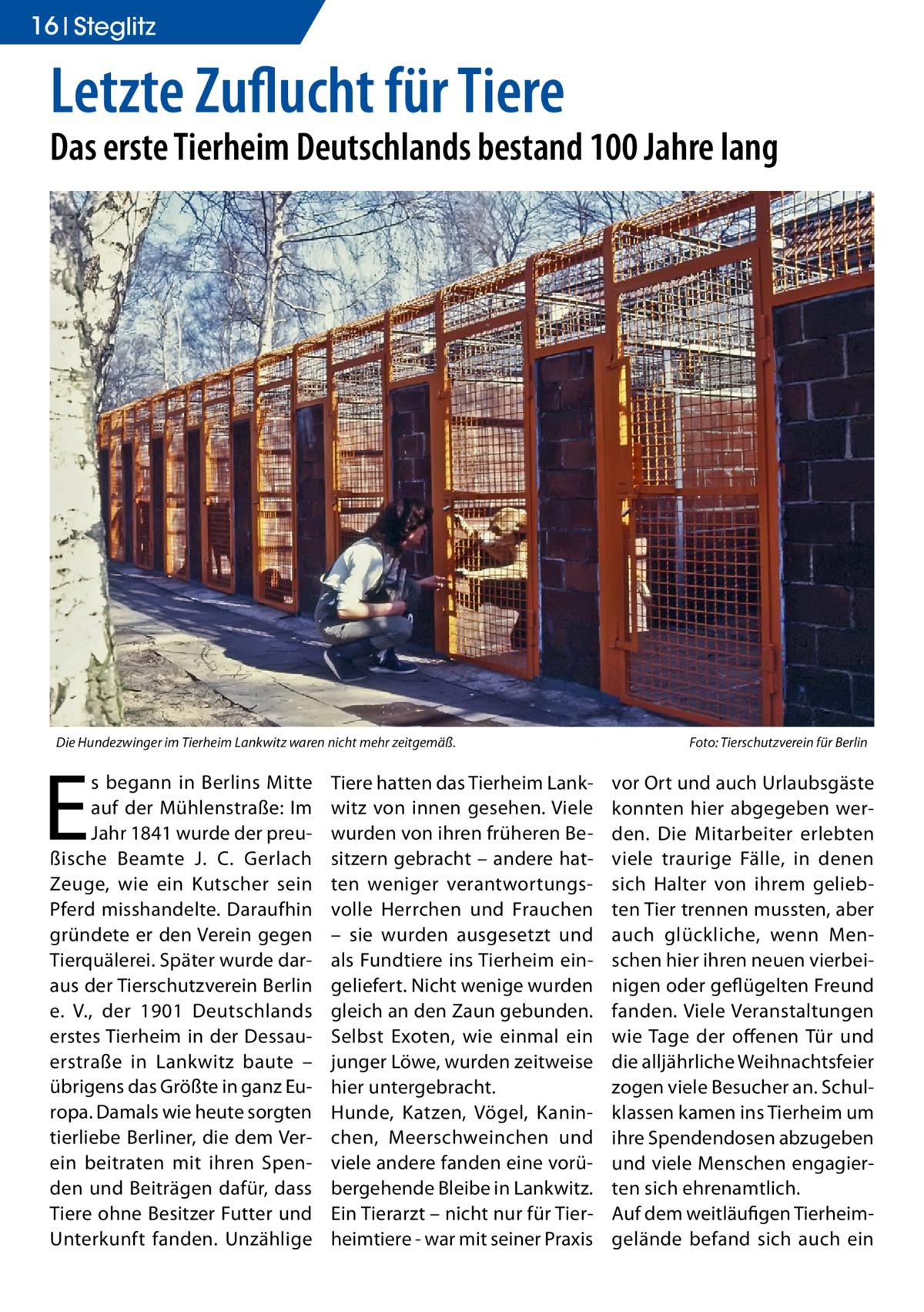 16 Ratgeber Steglitz  Letzte Zuflucht für Tiere  Das erste Tierheim Deutschlands bestand 100 Jahre lang  Die Hundezwinger im Tierheim Lankwitz waren nicht mehr zeitgemäß.�  E  s begann in Berlins Mitte auf der Mühlenstraße: Im Jahr 1841 wurde der preußische Beamte J. C. Gerlach Zeuge, wie ein Kutscher sein Pferd misshandelte. Daraufhin gründete er den Verein gegen Tierquälerei. Später wurde daraus der Tierschutzverein Berlin e. V., der 1901 Deutschlands erstes Tierheim in der Dessauerstraße in Lankwitz baute – übrigens das Größte in ganz Europa. Damals wie heute sorgten tierliebe Berliner, die dem Verein beitraten mit ihren Spenden und Beiträgen dafür, dass Tiere ohne Besitzer Futter und Unterkunft fanden. Unzählige  Tiere hatten das Tierheim Lankwitz von innen gesehen. Viele wurden von ihren früheren Besitzern gebracht – andere hatten weniger verantwortungsvolle Herrchen und Frauchen – sie wurden ausgesetzt und als Fundtiere ins Tierheim eingeliefert. Nicht wenige wurden gleich an den Zaun gebunden. Selbst Exoten, wie einmal ein junger Löwe, wurden zeitweise hier untergebracht. Hunde, Katzen, Vögel, Kaninchen, Meerschweinchen und viele andere fanden eine vorübergehende Bleibe in Lankwitz. Ein Tierarzt – nicht nur für Tierheimtiere - war mit seiner Praxis  Foto: Tierschutzverein für Berlin  vor Ort und auch Urlaubsgäste konnten hier abgegeben werden. Die Mitarbeiter erlebten viele traurige Fälle, in denen sich Halter von ihrem geliebten Tier trennen mussten, aber auch glückliche, wenn Menschen hier ihren neuen vierbeinigen oder geflügelten Freund fanden. Viele Veranstaltungen wie Tage der offenen Tür und die alljährliche Weihnachtsfeier zogen viele Besucher an. Schulklassen kamen ins Tierheim um ihre Spendendosen abzugeben und viele Menschen engagierten sich ehrenamtlich. Auf dem weitläufigen Tierheimgelände befand sich auch ein