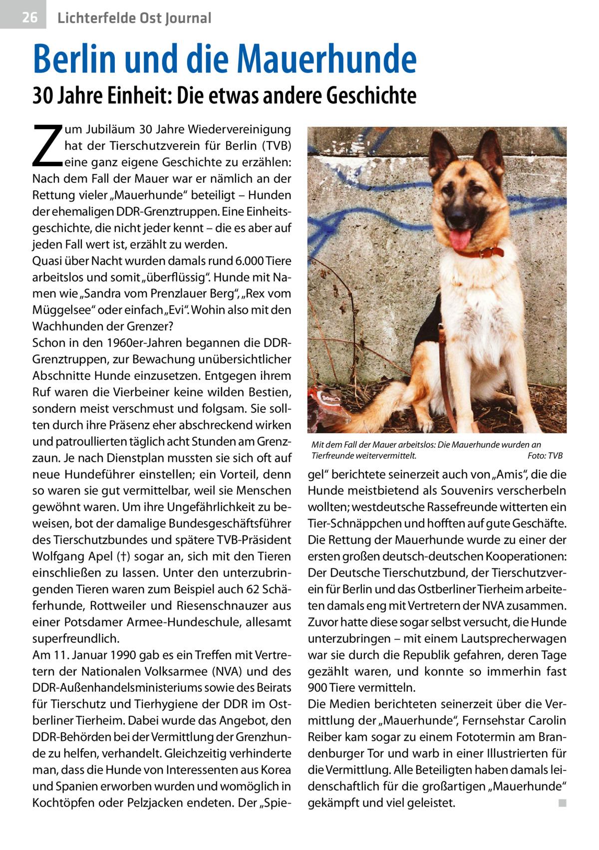 """26  Gesundheit Ost Journal Lichterfelde  Berlin und die Mauerhunde 30Jahre Einheit: Die etwas andere Geschichte  Z  um Jubiläum 30Jahre Wiedervereinigung hat der Tierschutzverein für Berlin (TVB) eine ganz eigene Geschichte zu erzählen: Nach dem Fall der Mauer war er nämlich an der Rettung vieler """"Mauerhunde"""" beteiligt – Hunden der ehemaligen DDR-Grenztruppen. Eine Einheitsgeschichte, die nicht jeder kennt – die es aber auf jeden Fall wert ist, erzählt zu werden. Quasi über Nacht wurden damals rund 6.000Tiere arbeitslos und somit """"überflüssig"""". Hunde mit Namen wie """"Sandra vom Prenzlauer Berg"""", """"Rex vom Müggelsee"""" oder einfach """"Evi"""". Wohin also mit den Wachhunden der Grenzer? Schon in den 1960er-Jahren begannen die DDRGrenztruppen, zur Bewachung unübersichtlicher Abschnitte Hunde einzusetzen. Entgegen ihrem Ruf waren die Vierbeiner keine wilden Bestien, sondern meist verschmust und folgsam. Sie sollten durch ihre Präsenz eher abschreckend wirken und patroullierten täglich acht Stunden am Grenzzaun. Je nach Dienstplan mussten sie sich oft auf neue Hundeführer einstellen; ein Vorteil, denn so waren sie gut vermittelbar, weil sie Menschen gewöhnt waren. Um ihre Ungefährlichkeit zu beweisen, bot der damalige Bundesgeschäftsführer des Tierschutzbundes und spätere TVB-Präsident Wolfgang Apel(†) sogar an, sich mit den Tieren einschließen zu lassen. Unter den unterzubringenden Tieren waren zum Beispiel auch 62Schäferhunde, Rottweiler und Riesenschnauzer aus einer Potsdamer Armee-Hundeschule, allesamt superfreundlich. Am 11.Januar 1990 gab es ein Treffen mit Vertretern der Nationalen Volksarmee (NVA) und des DDR-Außenhandelsministeriums sowie des Beirats für Tierschutz und Tierhygiene der DDR im Ostberliner Tierheim. Dabei wurde das Angebot, den DDR-Behörden bei der Vermittlung der Grenzhunde zu helfen, verhandelt. Gleichzeitig verhinderte man, dass die Hunde von Interessenten aus Korea und Spanien erworben wurden und womöglich in Kochtöpfen oder Pelzjacken endeten. Der """"Spie"""