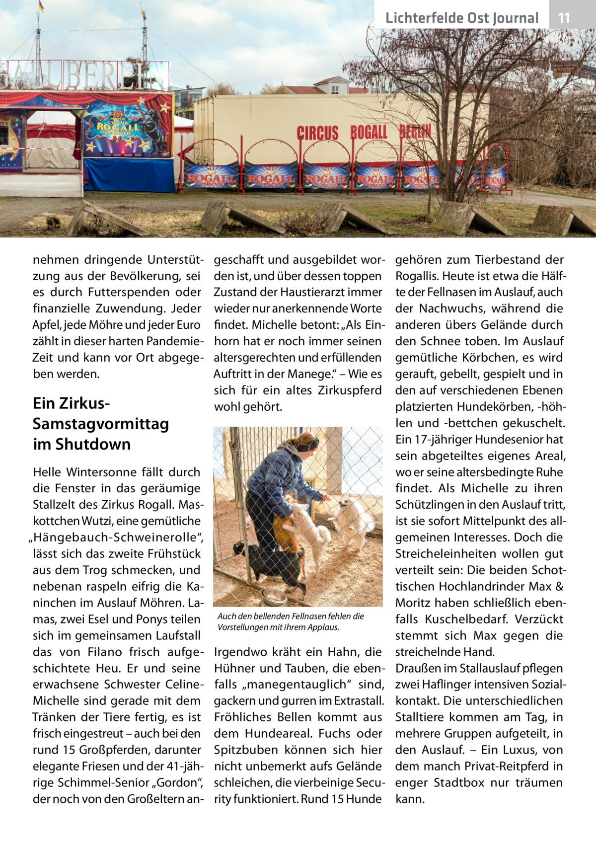"""Lichterfelde Ost Journal  nehmen dringende Unterstützung aus der Bevölkerung, sei es durch Futterspenden oder finanzielle Zuwendung. Jeder Apfel, jede Möhre und jeder Euro zählt in dieser harten PandemieZeit und kann vor Ort abgegeben werden.  Ein ZirkusSamstagvormittag im Shutdown Helle Wintersonne fällt durch die Fenster in das geräumige Stallzelt des Zirkus Rogall. Maskottchen Wutzi, eine gemütliche """"Hängebauch-Schweinerolle"""", lässt sich das zweite Frühstück aus dem Trog schmecken, und nebenan raspeln eifrig die Kaninchen im Auslauf Möhren. Lamas, zwei Esel und Ponys teilen sich im gemeinsamen Laufstall das von Filano frisch aufgeschichtete Heu. Er und seine erwachsene Schwester CelineMichelle sind gerade mit dem Tränken der Tiere fertig, es ist frisch eingestreut – auch bei den rund 15Großpferden, darunter elegante Friesen und der 41-jährige Schimmel-Senior """"Gordon"""", der noch von den Großeltern an geschafft und ausgebildet worden ist, und über dessen toppen Zustand der Haustierarzt immer wieder nur anerkennende Worte findet. Michelle betont: """"Als Einhorn hat er noch immer seinen altersgerechten und erfüllenden Auftritt in der Manege."""" – Wie es sich für ein altes Zirkuspferd wohl gehört.  Auch den bellenden Fellnasen fehlen die Vorstellungen mit ihrem Applaus.  Irgendwo kräht ein Hahn, die Hühner und Tauben, die ebenfalls """"manegentauglich"""" sind, gackern und gurren im Extrastall. Fröhliches Bellen kommt aus dem Hundeareal. Fuchs oder Spitzbuben können sich hier nicht unbemerkt aufs Gelände schleichen, die vierbeinige Security funktioniert. Rund 15Hunde  11 11  gehören zum Tierbestand der Rogallis. Heute ist etwa die Hälfte der Fellnasen im Auslauf, auch der Nachwuchs, während die anderen übers Gelände durch den Schnee toben. Im Auslauf gemütliche Körbchen, es wird gerauft, gebellt, gespielt und in den auf verschiedenen Ebenen platzierten Hundekörben, -höhlen und -bettchen gekuschelt. Ein 17-jähriger Hundesenior hat sein abgeteiltes eigenes Areal, wo er seine alter"""