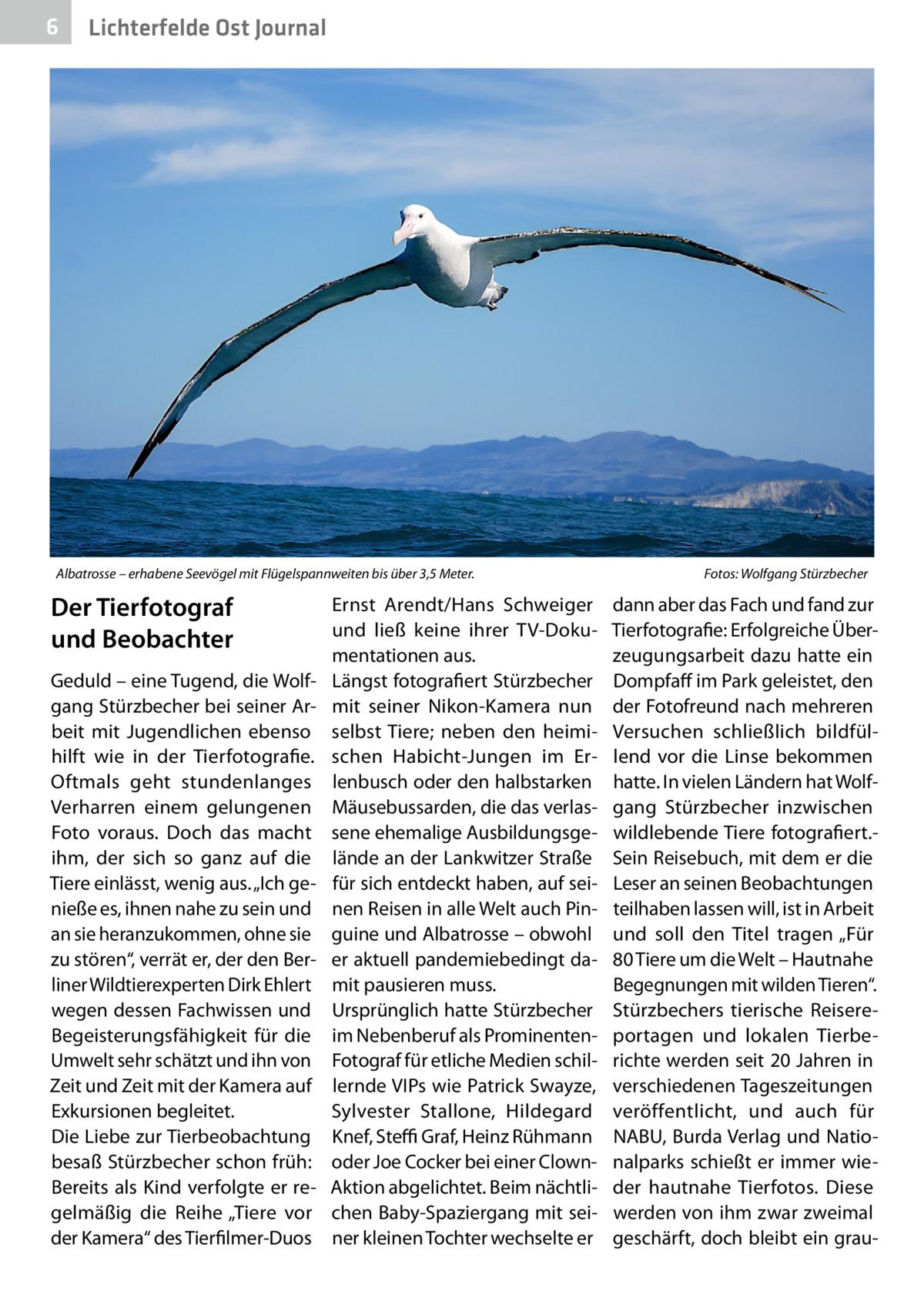 """6  Lichterfelde Ost Journal  Albatrosse – erhabene Seevögel mit Flügelspannweiten bis über 3,5Meter.�  Der Tierfotograf und Beobachter Geduld – eine Tugend, die Wolfgang Stürzbecher bei seiner Arbeit mit Jugendlichen ebenso hilft wie in der Tierfotografie. Oftmals geht stundenlanges Verharren einem gelungenen Foto voraus. Doch das macht ihm, der sich so ganz auf die Tiere einlässt, wenig aus. """"Ich genieße es, ihnen nahe zu sein und an sie heranzukommen, ohne sie zu stören"""", verrät er, der den Berliner Wildtierexperten Dirk Ehlert wegen dessen Fachwissen und Begeisterungsfähigkeit für die Umwelt sehr schätzt und ihn von Zeit und Zeit mit der Kamera auf Exkursionen begleitet. Die Liebe zur Tierbeobachtung besaß Stürzbecher schon früh: Bereits als Kind verfolgte er regelmäßig die Reihe """"Tiere vor der Kamera"""" des Tierfilmer-Duos  Ernst Arendt/Hans Schweiger und ließ keine ihrer TV-Dokumentationen aus. Längst fotografiert Stürzbecher mit seiner Nikon-Kamera nun selbst Tiere; neben den heimischen Habicht-Jungen im Erlenbusch oder den halbstarken Mäusebussarden, die das verlassene ehemalige Ausbildungsgelände an der Lankwitzer Straße für sich entdeckt haben, auf seinen Reisen in alle Welt auch Pinguine und Albatrosse – obwohl er aktuell pandemiebedingt damit pausieren muss. Ursprünglich hatte Stürzbecher im Nebenberuf als ProminentenFotograf für etliche Medien schillernde VIPs wie Patrick Swayze, Sylvester Stallone, Hildegard Knef, Steffi Graf, Heinz Rühmann oder Joe Cocker bei einer ClownAktion abgelichtet. Beim nächtlichen Baby-Spaziergang mit seiner kleinen Tochter wechselte er  Fotos: Wolfgang Stürzbecher  dann aber das Fach und fand zur Tierfotografie: Erfolgreiche Überzeugungsarbeit dazu hatte ein Dompfaff im Park geleistet, den der Fotofreund nach mehreren Versuchen schließlich bildfüllend vor die Linse bekommen hatte. In vielen Ländern hat Wolfgang Stürzbecher inzwischen wildlebende Tiere fotografiert.Sein Reisebuch, mit dem er die Leser an seinen Beobachtungen tei"""