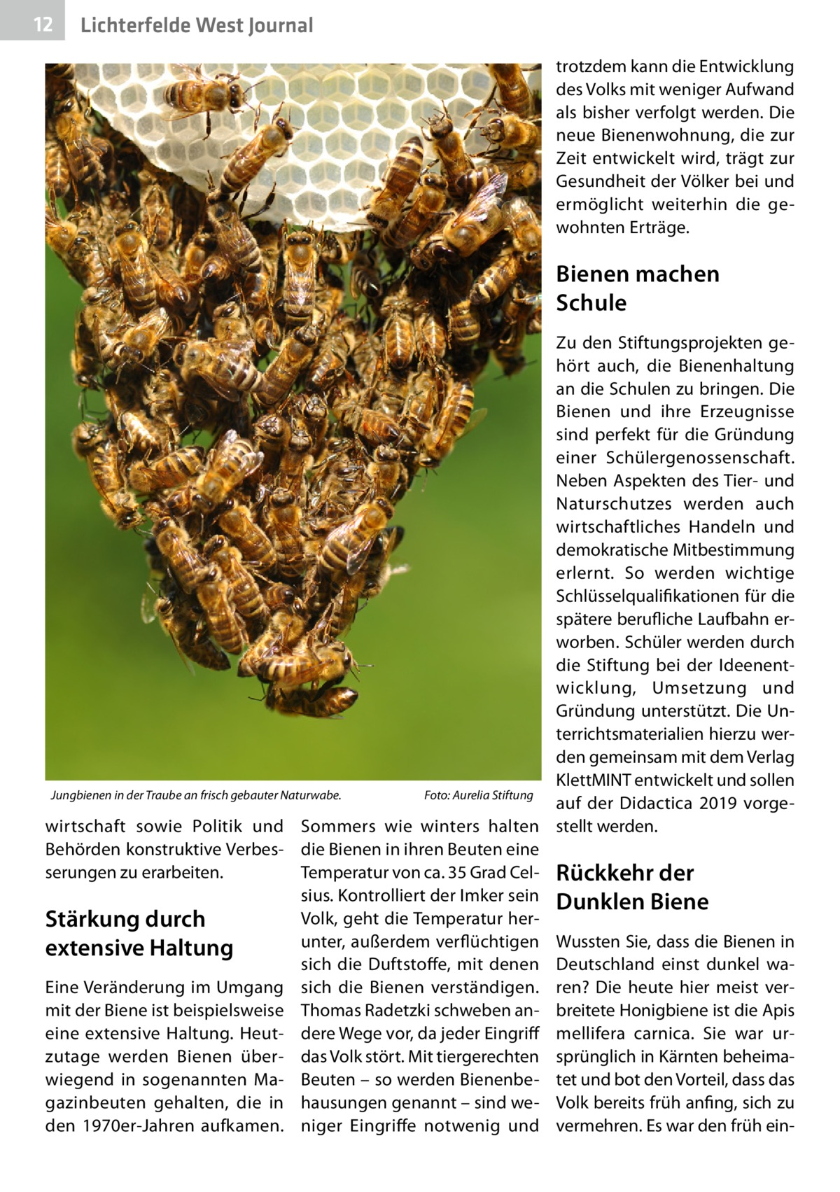12  Lichterfelde West Journal trotzdem kann die Entwicklung des Volks mit weniger Aufwand als bisher verfolgt werden. Die neue Bienenwohnung, die zur Zeit entwickelt wird, trägt zur Gesundheit der Völker bei und ermöglicht weiterhin die gewohnten Erträge.  Bienen machen Schule Zu den Stiftungsprojekten gehört auch, die Bienenhaltung an die Schulen zu bringen. Die Bienen und ihre Erzeugnisse sind perfekt für die Gründung einer Schülergenossenschaft. Neben Aspekten des Tier- und Naturschutzes werden auch wirtschaftliches Handeln und demokratische Mitbestimmung erlernt. So werden wichtige Schlüsselqualifikationen für die spätere berufliche Laufbahn erworben. Schüler werden durch die Stiftung bei der Ideenentwicklung, Umsetzung und Gründung unterstützt. Die Unterrichtsmaterialien hierzu werden gemeinsam mit dem Verlag KlettMINT entwickelt und sollen Jungbienen in der Traube an frisch gebauter Naturwabe.� Foto: Aurelia Stiftung auf der Didactica 2019 vorgewirtschaft sowie Politik und Sommers wie winters halten stellt werden. Behörden konstruktive Verbes- die Bienen in ihren Beuten eine serungen zu erarbeiten. Temperatur von ca. 35Grad Cel- Rückkehr der sius. Kontrolliert der Imker sein Dunklen Biene Volk, geht die Temperatur herStärkung durch unter, außerdem verflüchtigen Wussten Sie, dass die Bienen in extensive Haltung sich die Duftstoffe, mit denen Deutschland einst dunkel waEine Veränderung im Umgang sich die Bienen verständigen. ren? Die heute hier meist vermit der Biene ist beispielsweise Thomas Radetzki schweben an- breitete Honigbiene ist die Apis eine extensive Haltung. Heut- dere Wege vor, da jeder Eingriff mellifera carnica. Sie war urzutage werden Bienen über- das Volk stört. Mit tiergerechten sprünglich in Kärnten beheimawiegend in sogenannten Ma- Beuten – so werden Bienenbe- tet und bot den Vorteil, dass das gazinbeuten gehalten, die in hausungen genannt – sind we- Volk bereits früh anfing, sich zu den 1970er-Jahren aufkamen. niger Eingriffe notwenig und ve