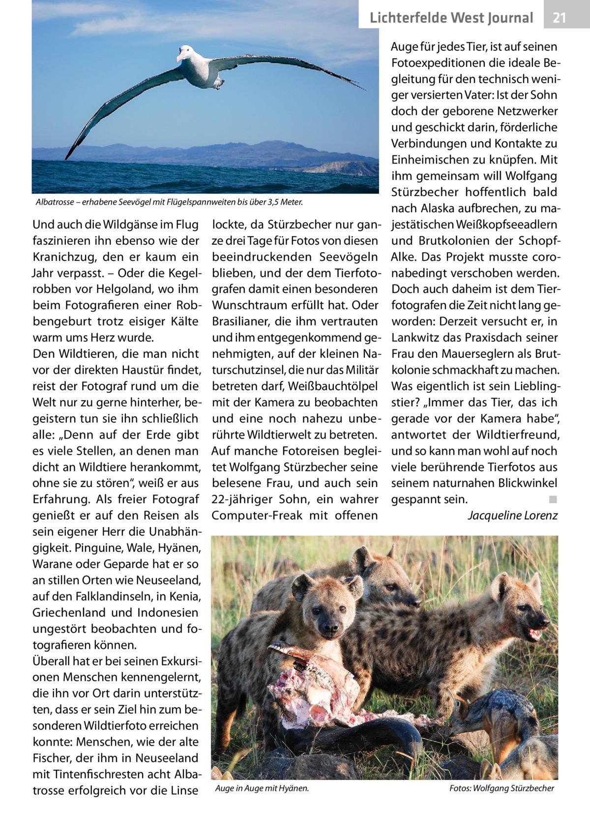 """Lichterfelde West Journal  Albatrosse – erhabene Seevögel mit Flügelspannweiten bis über 3,5Meter.  Und auch die Wildgänse im Flug faszinieren ihn ebenso wie der Kranichzug, den er kaum ein Jahr verpasst. – Oder die Kegelrobben vor Helgoland, wo ihm beim Fotografieren einer Robbengeburt trotz eisiger Kälte warm ums Herz wurde. Den Wildtieren, die man nicht vor der direkten Haustür findet, reist der Fotograf rund um die Welt nur zu gerne hinterher, begeistern tun sie ihn schließlich alle: """"Denn auf der Erde gibt es viele Stellen, an denen man dicht an Wildtiere herankommt, ohne sie zu stören"""", weiß er aus Erfahrung. Als freier Fotograf genießt er auf den Reisen als sein eigener Herr die Unabhängigkeit. Pinguine, Wale, Hyänen, Warane oder Geparde hat er so an stillen Orten wie Neuseeland, auf den Falklandinseln, in Kenia, Griechenland und Indonesien ungestört beobachten und fotografieren können. Überall hat er bei seinen Exkursionen Menschen kennengelernt, die ihn vor Ort darin unterstützten, dass er sein Ziel hin zum besonderen Wildtierfoto erreichen konnte: Menschen, wie der alte Fischer, der ihm in Neuseeland mit Tintenfischresten acht Albatrosse erfolgreich vor die Linse  lockte, da Stürzbecher nur ganze drei Tage für Fotos von diesen beeindruckenden Seevögeln blieben, und der dem Tierfotografen damit einen besonderen Wunschtraum erfüllt hat. Oder Brasilianer, die ihm vertrauten und ihm entgegenkommend genehmigten, auf der kleinen Naturschutzinsel, die nur das Militär betreten darf, Weißbauchtölpel mit der Kamera zu beobachten und eine noch nahezu unberührte Wildtierwelt zu betreten. Auf manche Fotoreisen begleitet Wolfgang Stürzbecher seine belesene Frau, und auch sein 22-jähriger Sohn, ein wahrer Computer-Freak mit offenen  Auge in Auge mit Hyänen.�  21 21  Auge für jedes Tier, ist auf seinen Fotoexpeditionen die ideale Begleitung für den technisch weniger versierten Vater: Ist der Sohn doch der geborene Netzwerker und geschickt darin, förderliche Verbindungen u"""