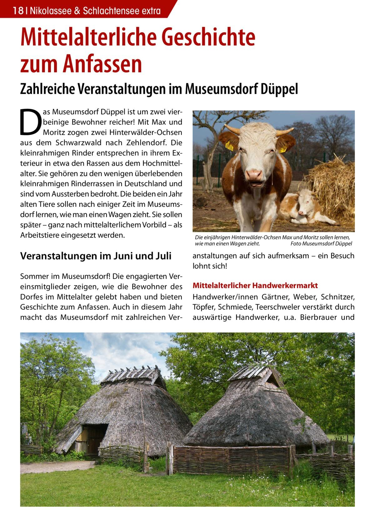 18 Nikolassee & Schlachtensee extra  Mittelalterliche Geschichte zum Anfassen  Zahlreiche Veranstaltungen im Museumsdorf Düppel  D  as Museumsdorf Düppel ist um zwei vierbeinige Bewohner reicher! Mit Max und Moritz zogen zwei Hinterwälder-Ochsen aus dem Schwarzwald nach Zehlendorf. Die kleinrahmigen Rinder entsprechen in ihrem Exterieur in etwa den Rassen aus dem Hochmittelalter. Sie gehören zu den wenigen überlebenden kleinrahmigen Rinderrassen in Deutschland und sind vom Aussterben bedroht. Die beiden ein Jahr alten Tiere sollen nach einiger Zeit im Museumsdorf lernen, wie man einen Wagen zieht. Sie sollen später – ganz nach mittelalterlichem Vorbild – als Arbeitstiere eingesetzt werden.  Veranstaltungen im Juni und Juli Sommer im Museumsdorf! Die engagierten Vereinsmitglieder zeigen, wie die Bewohner des Dorfes im Mittelalter gelebt haben und bieten Geschichte zum Anfassen. Auch in diesem Jahr macht das Museumsdorf mit zahlreichen Ver Die einjährigen Hinterwälder-Ochsen Max und Moritz sollen lernen, wie man einen Wagen zieht. � Foto Museumsdorf Düppel  anstaltungen auf sich aufmerksam – ein Besuch lohnt sich! Mittelalterlicher Handwerkermarkt Handwerker/innen Gärtner, Weber, Schnitzer, Töpfer, Schmiede, Teerschweler verstärkt durch auswärtige Handwerker, u.a. Bierbrauer und