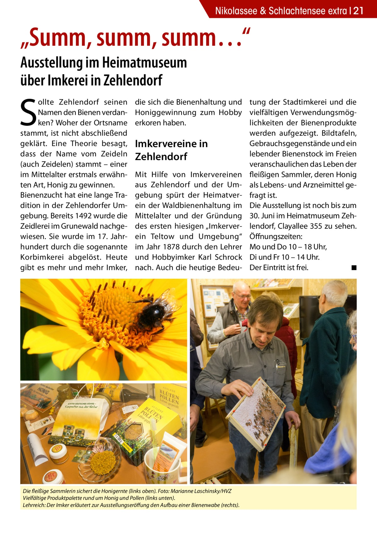 """Nikolassee & Schlachtensee extra 21  """"Summ, summ, summ…"""" Ausstellung im Heimatmuseum über Imkerei in Zehlendorf  S  ollte Zehlendorf seinen Namen den Bienen verdanken? Woher der Ortsname stammt, ist nicht abschließend geklärt. Eine Theorie besagt, dass der Name vom Zeideln (auch Zeidelen) stammt – einer im Mittelalter erstmals erwähnten Art, Honig zu gewinnen. Bienenzucht hat eine lange Tradition in der Zehlendorfer Umgebung. Bereits 1492 wurde die Zeidlerei im Grunewald nachgewiesen. Sie wurde im 17. Jahrhundert durch die sogenannte Korbimkerei abgelöst. Heute gibt es mehr und mehr Imker,  die sich die Bienenhaltung und tung der Stadtimkerei und die Honiggewinnung zum Hobby vielfältigen Verwendungsmöglichkeiten der Bienenprodukte erkoren haben. werden aufgezeigt. Bildtafeln, Gebrauchsgegenstände und ein Imkervereine in lebender Bienenstock im Freien Zehlendorf veranschaulichen das Leben der Mit Hilfe von Imkervereinen fleißigen Sammler, deren Honig aus Zehlendorf und der Um- als Lebens- und Arzneimittel gegebung spürt der Heimatver- fragt ist. ein der Waldbienenhaltung im Die Ausstellung ist noch bis zum Mittelalter und der Gründung 30. Juni im Heimatmuseum Zehdes ersten hiesigen """"Imkerver- lendorf, Clayallee 355 zu sehen. ein Teltow und Umgebung"""" Öffnungszeiten: im Jahr 1878 durch den Lehrer Mo und Do 10 – 18 Uhr, und Hobbyimker Karl Schrock Di und Fr 10 – 14 Uhr. nach. Auch die heutige Bedeu- Der Eintritt ist frei. � ◾  Die fleißige Sammlerin sichert die Honigernte (links oben). Foto: Marianne Laschinsky/HVZ Vielfältige Produktpalette rund um Honig und Pollen (links unten). Lehrreich: Der Imker erläutert zur Ausstellungseröffung den Aufbau einer Bienenwabe (rechts)."""