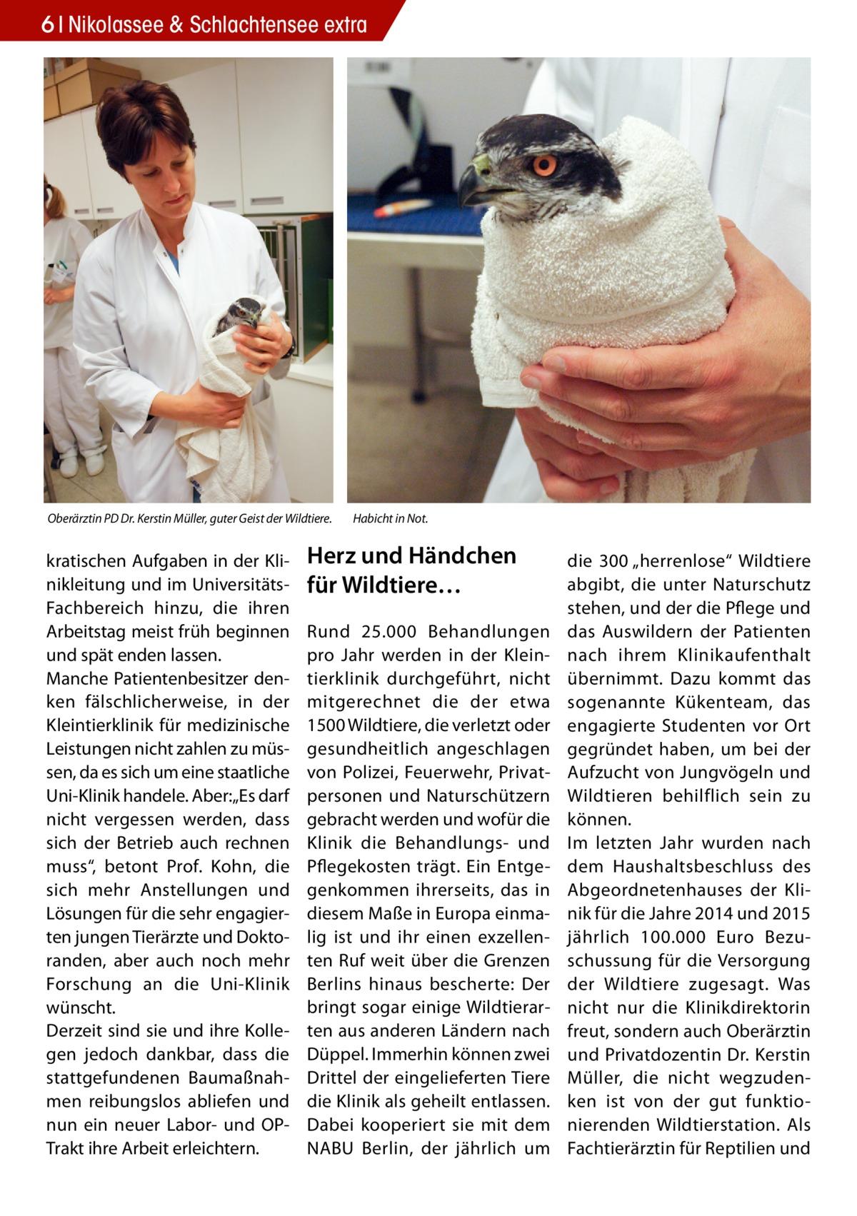 """6 Nikolassee & Schlachtensee extra  Oberärztin PD Dr. Kerstin Müller, guter Geist der Wildtiere.  kratischen Aufgaben in der Klinikleitung und im UniversitätsFachbereich hinzu, die ihren Arbeitstag meist früh beginnen und spät enden lassen. Manche Patientenbesitzer denken fälschlicherweise, in der Kleintierklinik für medizinische Leistungen nicht zahlen zu müssen, da es sich um eine staatliche Uni-Klinik handele. Aber:""""Es darf nicht vergessen werden, dass sich der Betrieb auch rechnen muss"""", betont Prof. Kohn, die sich mehr Anstellungen und Lösungen für die sehr engagierten jungen Tierärzte und Doktoranden, aber auch noch mehr Forschung an die Uni-Klinik wünscht. Derzeit sind sie und ihre Kollegen jedoch dankbar, dass die stattgefundenen Baumaßnahmen reibungslos abliefen und nun ein neuer Labor- und OPTrakt ihre Arbeit erleichtern.  Habicht in Not.  Herz und Händchen für Wildtiere… Rund 25.000 Behandlungen pro Jahr werden in der Kleintierklinik durchgeführt, nicht mitgerechnet die der etwa 1500 Wildtiere, die verletzt oder gesundheitlich angeschlagen von Polizei, Feuerwehr, Privatpersonen und Naturschützern gebracht werden und wofür die Klinik die Behandlungs- und Pflegekosten trägt. Ein Entgegenkommen ihrerseits, das in diesem Maße in Europa einmalig ist und ihr einen exzellenten Ruf weit über die Grenzen Berlins hinaus bescherte: Der bringt sogar einige Wildtierarten aus anderen Ländern nach Düppel. Immerhin können zwei Drittel der eingelieferten Tiere die Klinik als geheilt entlassen. Dabei kooperiert sie mit dem NABU Berlin, der jährlich um  die 300 """"herrenlose"""" Wildtiere abgibt, die unter Naturschutz stehen, und der die Pflege und das Auswildern der Patienten nach ihrem Klinikaufenthalt übernimmt. Dazu kommt das sogenannte Kükenteam, das engagierte Studenten vor Ort gegründet haben, um bei der Aufzucht von Jungvögeln und Wildtieren behilflich sein zu können. Im letzten Jahr wurden nach dem Haushaltsbeschluss des Abgeordnetenhauses der Klinik für die Jahre 2014 """