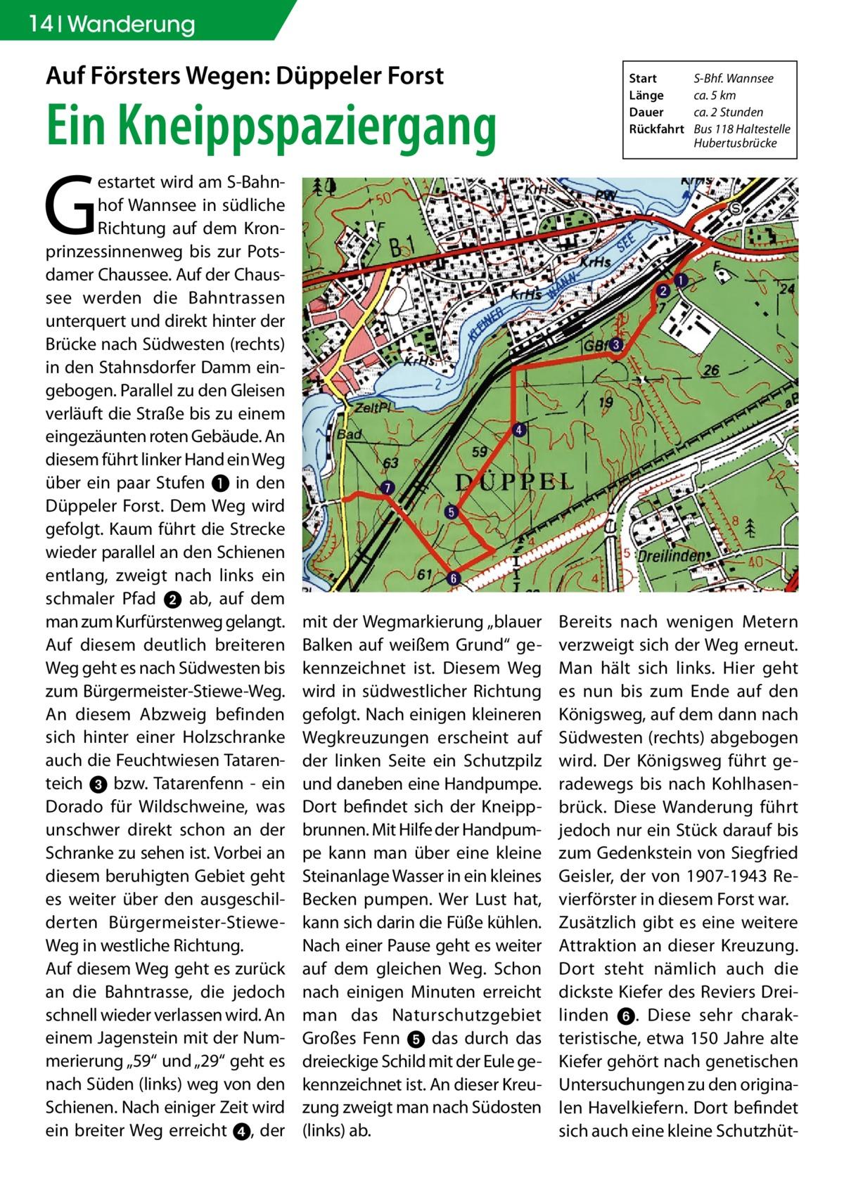 """14 Wanderung  Auf Försters Wegen: Düppeler Forst  Ein Kneippspaziergang  Start S-Bhf. Wannsee Länge ca. 5 km Dauer ca. 2 Stunden Rückfahrt Bus 118 Haltestelle Hubertusbrücke  G  estartet wird am S-Bahnhof Wannsee in südliche Richtung auf dem Kronprinzessinnenweg bis zur Potsdamer Chaussee. Auf der Chaussee werden die Bahntrassen unterquert und direkt hinter der Brücke nach Südwesten (rechts) in den Stahnsdorfer Damm eingebogen. Parallel zu den Gleisen verläuft die Straße bis zu einem eingezäunten roten Gebäude. An diesem führt linker Hand ein Weg über ein paar Stufen ❶ in den Düppeler Forst. Dem Weg wird gefolgt. Kaum führt die Strecke wieder parallel an den Schienen entlang, zweigt nach links ein schmaler Pfad 2 ab, auf dem man zum Kurfürstenweg gelangt. Auf diesem deutlich breiteren Weg geht es nach Südwesten bis zum Bürgermeister-Stiewe-Weg. An diesem Abzweig befinden sich hinter einer Holzschranke auch die Feuchtwiesen Tatarenteich 3 bzw. Tatarenfenn - ein Dorado für Wildschweine, was unschwer direkt schon an der Schranke zu sehen ist. Vorbei an diesem beruhigten Gebiet geht es weiter über den ausgeschilderten Bürgermeister-StieweWeg in westliche Richtung. Auf diesem Weg geht es zurück an die Bahntrasse, die jedoch schnell wieder verlassen wird. An einem Jagenstein mit der Nummerierung """"59"""" und """"29"""" geht es nach Süden (links) weg von den Schienen. Nach einiger Zeit wird ein breiter Weg erreicht 4, der  mit der Wegmarkierung """"blauer Balken auf weißem Grund"""" gekennzeichnet ist. Diesem Weg wird in südwestlicher Richtung gefolgt. Nach einigen kleineren Wegkreuzungen erscheint auf der linken Seite ein Schutzpilz und daneben eine Handpumpe. Dort befindet sich der Kneippbrunnen. Mit Hilfe der Handpumpe kann man über eine kleine Steinanlage Wasser in ein kleines Becken pumpen. Wer Lust hat, kann sich darin die Füße kühlen. Nach einer Pause geht es weiter auf dem gleichen Weg. Schon nach einigen Minuten erreicht man das Naturschutzgebiet Großes Fenn 5 das durch das dreie"""