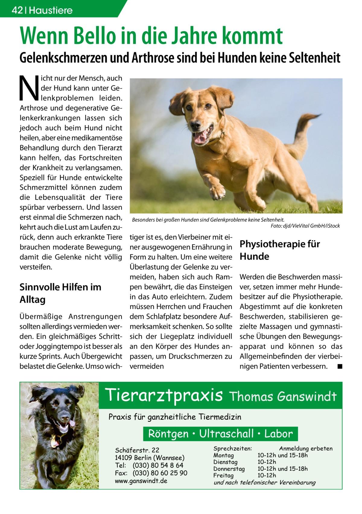 42 Haustiere  Wenn Bello in die Jahre kommt  Gelenkschmerzen und Arthrose sind bei Hunden keine Seltenheit  N  icht nur der Mensch, auch der Hund kann unter Gelenkproblemen leiden. Arthrose und degenerative Gelenkerkrankungen lassen sich jedoch auch beim Hund nicht heilen, aber eine medikamentöse Behandlung durch den Tierarzt kann helfen, das Fortschreiten der Krankheit zu verlangsamen. Speziell für Hunde entwickelte Schmerzmittel können zudem die Lebensqualität der Tiere spürbar verbessern. Und lassen erst einmal die Schmerzen nach, kehrt auch die Lust am Laufen zurück, denn auch erkrankte Tiere brauchen moderate Bewegung, damit die Gelenke nicht völlig versteifen.  Sinnvolle Hilfen im Alltag Übermäßige Anstrengungen sollten allerdings vermieden werden. Ein gleichmäßiges Schrittoder Joggingtempo ist besser als kurze Sprints. Auch Übergewicht belastet die Gelenke. Umso wich Besonders bei großen Hunden sind Gelenkprobleme keine Seltenheit. � Foto: djd/VieVital GmbH/iStock  tiger ist es, den Vierbeiner mit einer ausgewogenen Ernährung in Form zu halten. Um eine weitere Überlastung der Gelenke zu vermeiden, haben sich auch Rampen bewährt, die das Einsteigen in das Auto erleichtern. Zudem müssen Herrchen und Frauchen dem Schlafplatz besondere Aufmerksamkeit schenken. So sollte sich der Liegeplatz individuell an den Körper des Hundes anpassen, um Druckschmerzen zu vermeiden  Physiotherapie für Hunde Werden die Beschwerden massiver, setzen immer mehr Hundebesitzer auf die Physiotherapie. Abgestimmt auf die konkreten Beschwerden, stabilisieren gezielte Massagen und gymnastische Übungen den Bewegungsapparat und können so das Allgemeinbefinden der vierbeinigen Patienten verbessern. � ◾  Tierarztpraxis Thomas Ganswindt Praxis für ganzheitliche Tiermedizin  Röntgen • Ultraschall • Labor Schäferstr. 22 14109 Berlin (Wannsee) Tel: (030) 80 54 8 64 Fax: (030) 80 60 25 90 www.ganswindt.de  Sprechzeiten: Montag Dienstag Donnerstag Freitag  Anmeldung erbeten 10-12h und 15-18h 10-12h