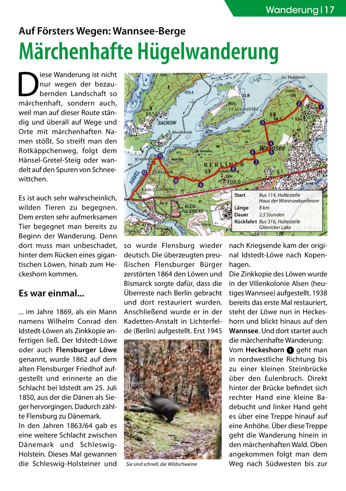 Wanderung 17  Auf Försters Wegen: Wannsee-Berge  Märchenhafte Hügelwanderung  D  iese Wanderung ist nicht nur wegen der bezaubernden Landschaft so märchenhaft, sondern auch, weil man auf dieser Route ständig und überall auf Wege und Orte mit märchenhaften Namen stößt. So streift man den Rotkäppchenweg, folgt dem Hänsel-Gretel-Steig oder wandelt auf den Spuren von Schneewittchen. Es ist auch sehr wahrscheinlich, wilden Tieren zu begegnen. Dem ersten sehr aufmerksamen Tier begegnet man bereits zu Beginn der Wanderung. Denn dort muss man unbeschadet, hinter dem Rücken eines gigantischen Löwen, hinab zum Heckeshorn kommen.  so wurde Flensburg wieder deutsch. Die überzeugten preußischen Flensburger Bürger zerstörten 1864 den Löwen und Bismarck sorgte dafür, dass die Überreste nach Berlin gebracht Es war einmal... und dort restauriert wurden. ... im Jahre 1869, als ein Mann Anschließend wurde er in der namens Wilhelm Conrad den Kadetten-Anstalt in LichterfelIdstedt-Löwen als Zinkkopie an- de (Berlin) aufgestellt. Erst 1945 fertigen ließ. Der Idstedt-Löwe oder auch Flensburger Löwe genannt, wurde 1862 auf dem alten Flensburger Friedhof aufgestellt und erinnerte an die Schlacht bei Idstedt am 25. Juli 1850, aus der die Dänen als Sieger hervorgingen. Dadurch zählte Flensburg zu Dänemark. In den Jahren 1863/64 gab es eine weitere Schlacht zwischen Dänemark und SchleswigHolstein. Dieses Mal gewannen die Schleswig-Holsteiner und Sie sind schnell, die Wildschweine  Start  Bus 114, Haltestelle Haus der Wannseekonferenr Länge 8 km Dauer 2,5 Stunden Rückfahrt Bus 316, Haltestelle Glienicker Lake  nach Kriegsende kam der original Idstedt-Löwe nach Kopenhagen. Die Zinkkopie des Löwen wurde in der Villenkolonie Alsen (heutiges Wannsee) aufgestellt. 1938 bereits das erste Mal restauriert, steht der Löwe nun in Heckeshorn und blickt hinaus auf den Wannsee. Und dort startet auch die märchenhafte Wanderung: Vom Heckeshorn ➊ geht man in nordwestliche Richtung bis zu einer kleinen Steinbrüc