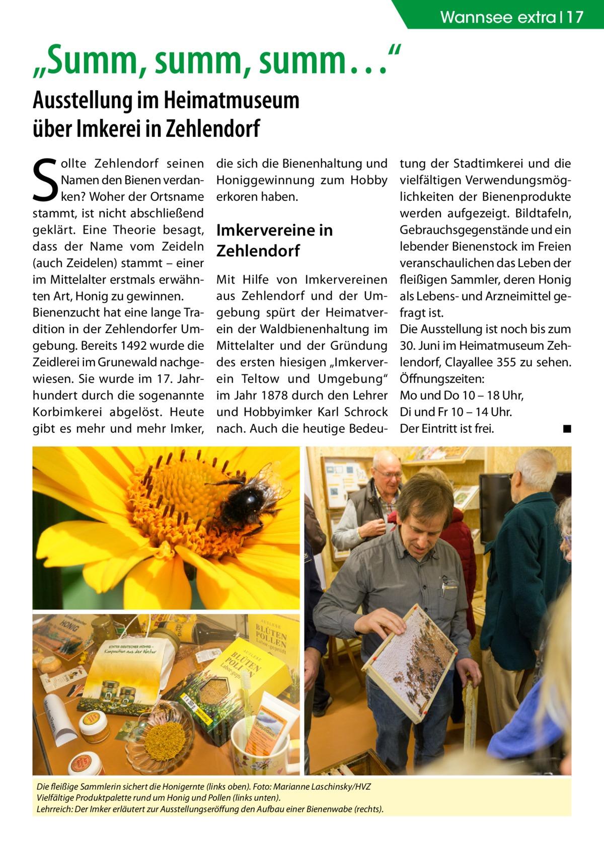 """Wannsee extra 17  """"Summ, summ, summ…"""" Ausstellung im Heimatmuseum über Imkerei in Zehlendorf  S  ollte Zehlendorf seinen Namen den Bienen verdanken? Woher der Ortsname stammt, ist nicht abschließend geklärt. Eine Theorie besagt, dass der Name vom Zeideln (auch Zeidelen) stammt – einer im Mittelalter erstmals erwähnten Art, Honig zu gewinnen. Bienenzucht hat eine lange Tradition in der Zehlendorfer Umgebung. Bereits 1492 wurde die Zeidlerei im Grunewald nachgewiesen. Sie wurde im 17. Jahrhundert durch die sogenannte Korbimkerei abgelöst. Heute gibt es mehr und mehr Imker,  die sich die Bienenhaltung und tung der Stadtimkerei und die Honiggewinnung zum Hobby vielfältigen Verwendungsmöglichkeiten der Bienenprodukte erkoren haben. werden aufgezeigt. Bildtafeln, Gebrauchsgegenstände und ein Imkervereine in lebender Bienenstock im Freien Zehlendorf veranschaulichen das Leben der Mit Hilfe von Imkervereinen fleißigen Sammler, deren Honig aus Zehlendorf und der Um- als Lebens- und Arzneimittel gegebung spürt der Heimatver- fragt ist. ein der Waldbienenhaltung im Die Ausstellung ist noch bis zum Mittelalter und der Gründung 30. Juni im Heimatmuseum Zehdes ersten hiesigen """"Imkerver- lendorf, Clayallee 355 zu sehen. ein Teltow und Umgebung"""" Öffnungszeiten: im Jahr 1878 durch den Lehrer Mo und Do 10 – 18 Uhr, und Hobbyimker Karl Schrock Di und Fr 10 – 14 Uhr. nach. Auch die heutige Bedeu- Der Eintritt ist frei. � ◾  Die fleißige Sammlerin sichert die Honigernte (links oben). Foto: Marianne Laschinsky/HVZ Vielfältige Produktpalette rund um Honig und Pollen (links unten). Lehrreich: Der Imker erläutert zur Ausstellungseröffung den Aufbau einer Bienenwabe (rechts)."""