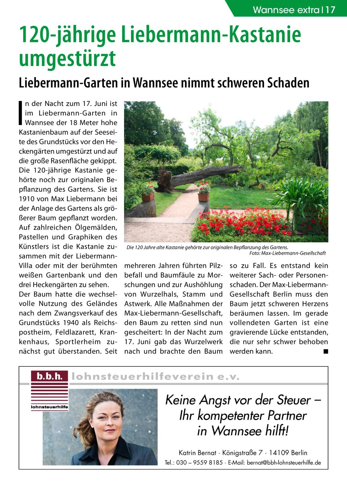 Wannsee extra 17  120-jährige Liebermann-Kastanie umgestürzt Liebermann-Garten in Wannsee nimmt schweren Schaden  I  n der Nacht zum 17. Juni ist im Liebermann-Garten in Wannsee der 18 Meter hohe Kastanienbaum auf der Seeseite des Grundstücks vor den Heckengärten umgestürzt und auf die große Rasenfläche gekippt. Die 120-jährige Kastanie gehörte noch zur originalen Bepflanzung des Gartens. Sie ist 1910 von Max Liebermann bei der Anlage des Gartens als größerer Baum gepflanzt worden. Auf zahlreichen Ölgemälden, Pastellen und Graphiken des Künstlers ist die Kastanie zusammen mit der LiebermannVilla oder mit der berühmten weißen Gartenbank und den drei Heckengärten zu sehen. Der Baum hatte die wechselvolle Nutzung des Geländes nach dem Zwangsverkauf des Grundstücks 1940 als Reichspostheim, Feldlazarett, Krankenhaus, Sportlerheim zunächst gut überstanden. Seit  Die 120 Jahre alte Kastanie gehörte zur originalen Bepflanzung des Gartens. � Foto: Max-Liebermann-Gesellschaft  mehreren Jahren führten Pilzbefall und Baumfäule zu Morschungen und zur Aushöhlung von Wurzelhals, Stamm und Astwerk. Alle Maßnahmen der Max-Liebermann-Gesellschaft, den Baum zu retten sind nun gescheitert: In der Nacht zum 17. Juni gab das Wurzelwerk nach und brachte den Baum  so zu Fall. Es entstand kein weiterer Sach- oder Personenschaden. Der Max-LiebermannGesellschaft Berlin muss den Baum jetzt schweren Herzens beräumen lassen. Im gerade vollendeten Garten ist eine gravierende Lücke entstanden, die nur sehr schwer behoben werden kann. � ◾  Keine Angst vor der Steuer – Ihr kompetenter Partner in Wannsee hilft! Katrin Bernat · Königstraße 7 · 14109 Berlin Tel.: 030 – 9559 8185 · E-Mail: bernat@bbh-lohnsteuerhilfe.de