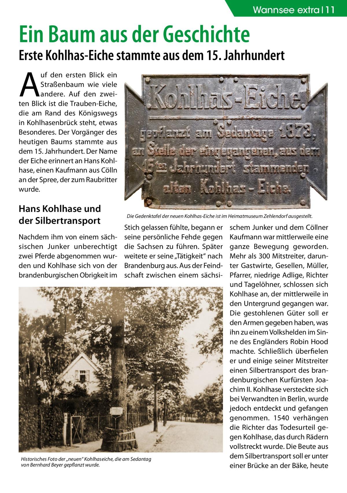 """Wannsee extra 11  Ein Baum aus der Geschichte  Erste Kohlhas-Eiche stammte aus dem 15.Jahrhundert  A  uf den ersten Blick ein Straßenbaum wie viele andere. Auf den zweiten Blick ist die Trauben-Eiche, die am Rand des Königswegs in Kohlhasenbrück steht, etwas Besonderes. Der Vorgänger des heutigen Baums stammte aus dem 15.Jahrhundert. Der Name der Eiche erinnert an Hans Kohlhase, einen Kaufmann aus Cölln an der Spree, der zum Raubritter wurde.  Hans Kohlhase und der Silbertransport Nachdem ihm von einem sächsischen Junker unberechtigt zwei Pferde abgenommen wurden und Kohlhase sich von der brandenburgischen Obrigkeit im  Die Gedenktafel der neuen Kohlhas-Eiche ist im Heimatmuseum Zehlendorf ausgestellt.  Stich gelassen fühlte, begann er seine persönliche Fehde gegen die Sachsen zu führen. Später weitete er seine """"Tätigkeit"""" nach Brandenburg aus. Aus der Feindschaft zwischen einem sächsi Historisches Foto der """"neuen"""" Kohlhaseiche, die am Sedantag von Bernhard Beyer gepflanzt wurde.  schem Junker und dem Cöllner Kaufmann war mittlerweile eine ganze Bewegung geworden. Mehr als 300 Mitstreiter, darunter Gastwirte, Gesellen, Müller, Pfarrer, niedrige Adlige, Richter und Tagelöhner, schlossen sich Kohlhase an, der mittlerweile in den Untergrund gegangen war. Die gestohlenen Güter soll er den Armen gegeben haben, was ihn zu einem Volkshelden im Sinne des Engländers Robin Hood machte. Schließlich überfielen er und einige seiner Mitstreiter einen Silbertransport des brandenburgischen Kurfürsten Joachim II. Kohlhase versteckte sich bei Verwandten in Berlin, wurde jedoch entdeckt und gefangen genommen. 1540 verhängen die Richter das Todesurteil gegen Kohlhase, das durch Rädern vollstreckt wurde. Die Beute aus dem Silbertransport soll er unter einer Brücke an der Bäke, heute"""
