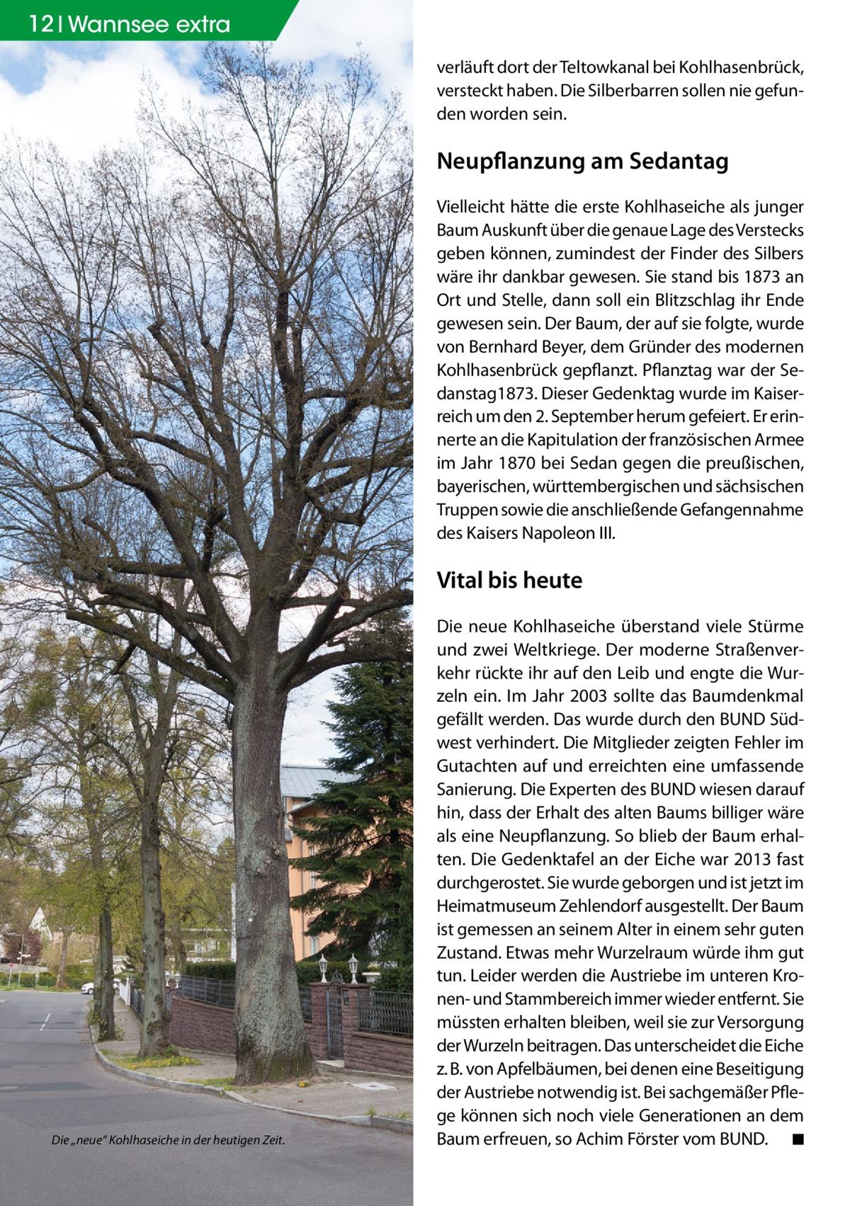 """12 Wannsee extra verläuft dort der Teltowkanal bei Kohlhasenbrück, versteckt haben. Die Silberbarren sollen nie gefunden worden sein.  Neupflanzung am Sedantag Vielleicht hätte die erste Kohlhaseiche als junger Baum Auskunft über die genaue Lage des Verstecks geben können, zumindest der Finder des Silbers wäre ihr dankbar gewesen. Sie stand bis 1873 an Ort und Stelle, dann soll ein Blitzschlag ihr Ende gewesen sein. Der Baum, der auf sie folgte, wurde von Bernhard Beyer, dem Gründer des modernen Kohlhasenbrück gepflanzt. Pflanztag war der Sedanstag1873. Dieser Gedenktag wurde im Kaiserreich um den 2.September herum gefeiert. Er erinnerte an die Kapitulation der französischen Armee im Jahr 1870 bei Sedan gegen die preußischen, bayerischen, württembergischen und sächsischen Truppen sowie die anschließende Gefangennahme des Kaisers Napoleon III.  Vital bis heute  Die """"neue"""" Kohlhaseiche in der heutigen Zeit.  Die neue Kohlhaseiche überstand viele Stürme und zwei Weltkriege. Der moderne Straßenverkehr rückte ihr auf den Leib und engte die Wurzeln ein. Im Jahr 2003 sollte das Baumdenkmal gefällt werden. Das wurde durch den BUND Südwest verhindert. Die Mitglieder zeigten Fehler im Gutachten auf und erreichten eine umfassende Sanierung. Die Experten des BUND wiesen darauf hin, dass der Erhalt des alten Baums billiger wäre als eine Neupflanzung. So blieb der Baum erhalten. Die Gedenktafel an der Eiche war 2013 fast durchgerostet. Sie wurde geborgen und ist jetzt im Heimatmuseum Zehlendorf ausgestellt. Der Baum ist gemessen an seinem Alter in einem sehr guten Zustand. Etwas mehr Wurzelraum würde ihm gut tun. Leider werden die Austriebe im unteren Kronen- und Stammbereich immer wieder entfernt. Sie müssten erhalten bleiben, weil sie zur Versorgung der Wurzeln beitragen. Das unterscheidet die Eiche z.B. von Apfelbäumen, bei denen eine Beseitigung der Austriebe notwendig ist. Bei sachgemäßer Pflege können sich noch viele Generationen an dem Baum erfreuen, so Achim Förster vom B"""