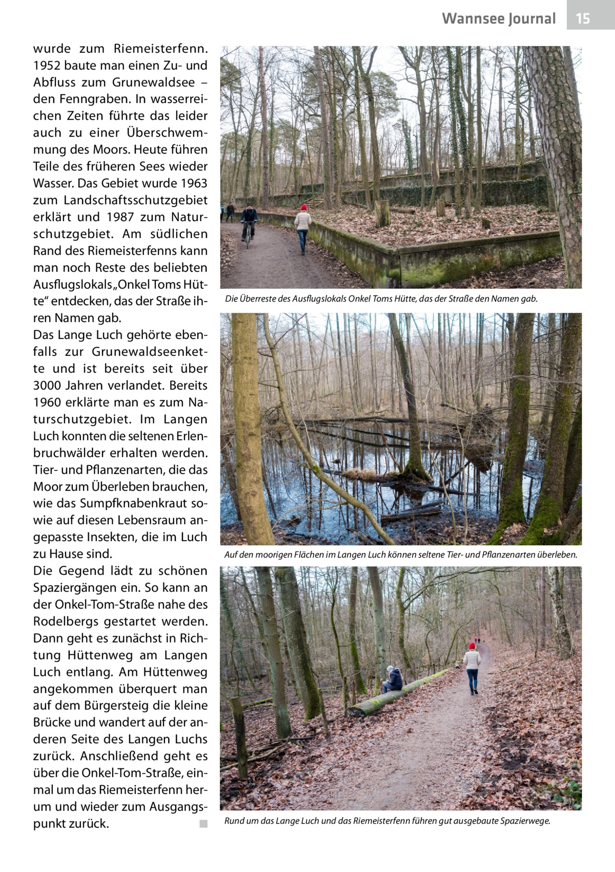 """Wannsee Journal wurde zum Riemeisterfenn. 1952 baute man einen Zu- und Abfluss zum Grunewaldsee – den Fenngraben. In wasserreichen Zeiten führte das leider auch zu einer Überschwemmung des Moors. Heute führen Teile des früheren Sees wieder Wasser. Das Gebiet wurde 1963 zum Landschaftsschutzgebiet erklärt und 1987 zum Naturschutzgebiet. Am südlichen Rand des Riemeisterfenns kann man noch Reste des beliebten Ausflugslokals """"Onkel Toms Hütte"""" entdecken, das der Straße ihren Namen gab. Das Lange Luch gehörte ebenfalls zur Grunewaldseenkette und ist bereits seit über 3000 Jahren verlandet. Bereits 1960 erklärte man es zum Naturschutzgebiet. Im Langen Luch konnten die seltenen Erlenbruchwälder erhalten werden. Tier- und Pflanzenarten, die das Moor zum Überleben brauchen, wie das Sumpfknabenkraut sowie auf diesen Lebensraum angepasste Insekten, die im Luch zu Hause sind. Die Gegend lädt zu schönen Spaziergängen ein. So kann an der Onkel-Tom-Straße nahe des Rodelbergs gestartet werden. Dann geht es zunächst in Richtung Hüttenweg am Langen Luch entlang. Am Hüttenweg angekommen überquert man auf dem Bürgersteig die kleine Brücke und wandert auf der anderen Seite des Langen Luchs zurück. Anschließend geht es über die Onkel-Tom-Straße, einmal um das Riemeisterfenn herum und wieder zum Ausgangspunkt zurück.� ◾  15  Die Überreste des Ausflugslokals Onkel Toms Hütte, das der Straße den Namen gab.  Auf den moorigen Flächen im Langen Luch können seltene Tier- und Pflanzenarten überleben.  Rund um das Lange Luch und das Riemeisterfenn führen gut ausgebaute Spazierwege."""
