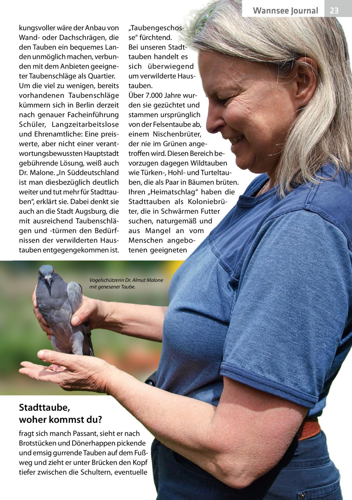 """Wannsee Journal kungsvoller wäre der Anbau von Wand- oder Dachschrägen, die den Tauben ein bequemes Landen unmöglich machen, verbunden mit dem Anbieten geeigneter Taubenschläge als Quartier. Um die viel zu wenigen, bereits vorhandenen Taubenschläge kümmern sich in Berlin derzeit nach genauer Facheinführung Schüler, Langzeitarbeitslose und Ehrenamtliche: Eine preiswerte, aber nicht einer verantwortungsbewussten Hauptstadt gebührende Lösung, weiß auch Dr.Malone. """"In Süddeutschland ist man diesbezüglich deutlich weiter und tut mehr für Stadttauben"""", erklärt sie. Dabei denkt sie auch an die Stadt Augsburg, die mit ausreichend Taubenschlägen und -türmen den Bedürfnissen der verwilderten Haustauben entgegengekommen ist.  """"Taubengeschosse"""" fürchtend. Bei unseren Stadttauben handelt es sich überwiegend um verwilderte Haustauben. Über 7.000Jahre wurden sie gezüchtet und stammen ursprünglich von der Felsentaube ab, einem Nischenbrüter, der nie im Grünen angetroffen wird. Diesen Bereich bevorzugen dagegen Wildtauben wie Türken-, Hohl- und Turteltauben, die als Paar in Bäumen brüten. Ihren """"Heimatschlag"""" haben die Stadttauben als Koloniebrüter, die in Schwärmen Futter suchen, naturgemäß und aus Mangel an vom Menschen angebotenen geeigneten  Vogelschützerin Dr.Almut Malone mit genesener Taube.  Stadttaube, woher kommst du? fragt sich manch Passant, sieht er nach Brotstücken und Dönerhappen pickende und emsig gurrende Tauben auf dem Fußweg und zieht er unter Brücken den Kopf tiefer zwischen die Schultern, eventuelle  23"""