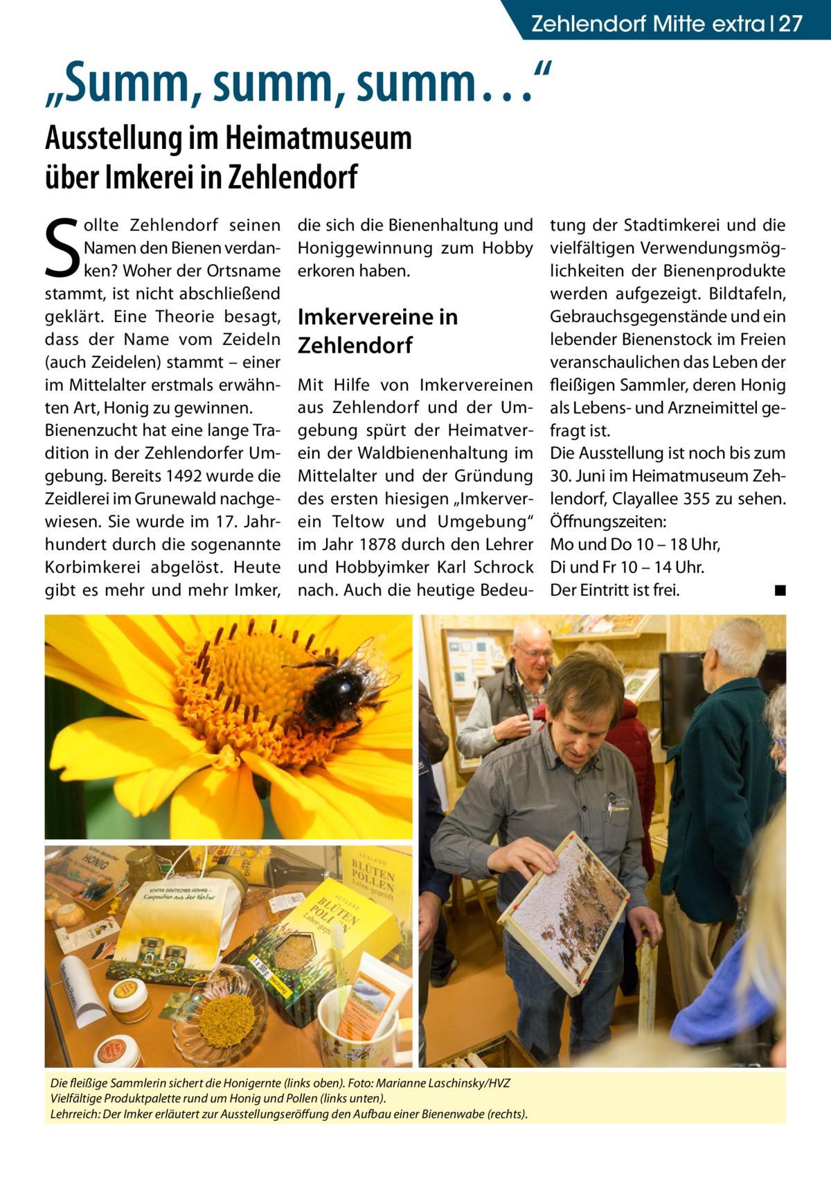 """Zehlendorf Mitte extra 27  """"Summ, summ, summ…"""" Ausstellung im Heimatmuseum über Imkerei in Zehlendorf  S  ollte Zehlendorf seinen Namen den Bienen verdanken? Woher der Ortsname stammt, ist nicht abschließend geklärt. Eine Theorie besagt, dass der Name vom Zeideln (auch Zeidelen) stammt – einer im Mittelalter erstmals erwähnten Art, Honig zu gewinnen. Bienenzucht hat eine lange Tradition in der Zehlendorfer Umgebung. Bereits 1492 wurde die Zeidlerei im Grunewald nachgewiesen. Sie wurde im 17. Jahrhundert durch die sogenannte Korbimkerei abgelöst. Heute gibt es mehr und mehr Imker,  die sich die Bienenhaltung und tung der Stadtimkerei und die Honiggewinnung zum Hobby vielfältigen Verwendungsmöglichkeiten der Bienenprodukte erkoren haben. werden aufgezeigt. Bildtafeln, Gebrauchsgegenstände und ein Imkervereine in lebender Bienenstock im Freien Zehlendorf veranschaulichen das Leben der Mit Hilfe von Imkervereinen fleißigen Sammler, deren Honig aus Zehlendorf und der Um- als Lebens- und Arzneimittel gegebung spürt der Heimatver- fragt ist. ein der Waldbienenhaltung im Die Ausstellung ist noch bis zum Mittelalter und der Gründung 30. Juni im Heimatmuseum Zehdes ersten hiesigen """"Imkerver- lendorf, Clayallee 355 zu sehen. ein Teltow und Umgebung"""" Öffnungszeiten: im Jahr 1878 durch den Lehrer Mo und Do 10 – 18 Uhr, und Hobbyimker Karl Schrock Di und Fr 10 – 14 Uhr. nach. Auch die heutige Bedeu- Der Eintritt ist frei. � ◾  Die fleißige Sammlerin sichert die Honigernte (links oben). Foto: Marianne Laschinsky/HVZ Vielfältige Produktpalette rund um Honig und Pollen (links unten). Lehrreich: Der Imker erläutert zur Ausstellungseröffung den Aufbau einer Bienenwabe (rechts)."""