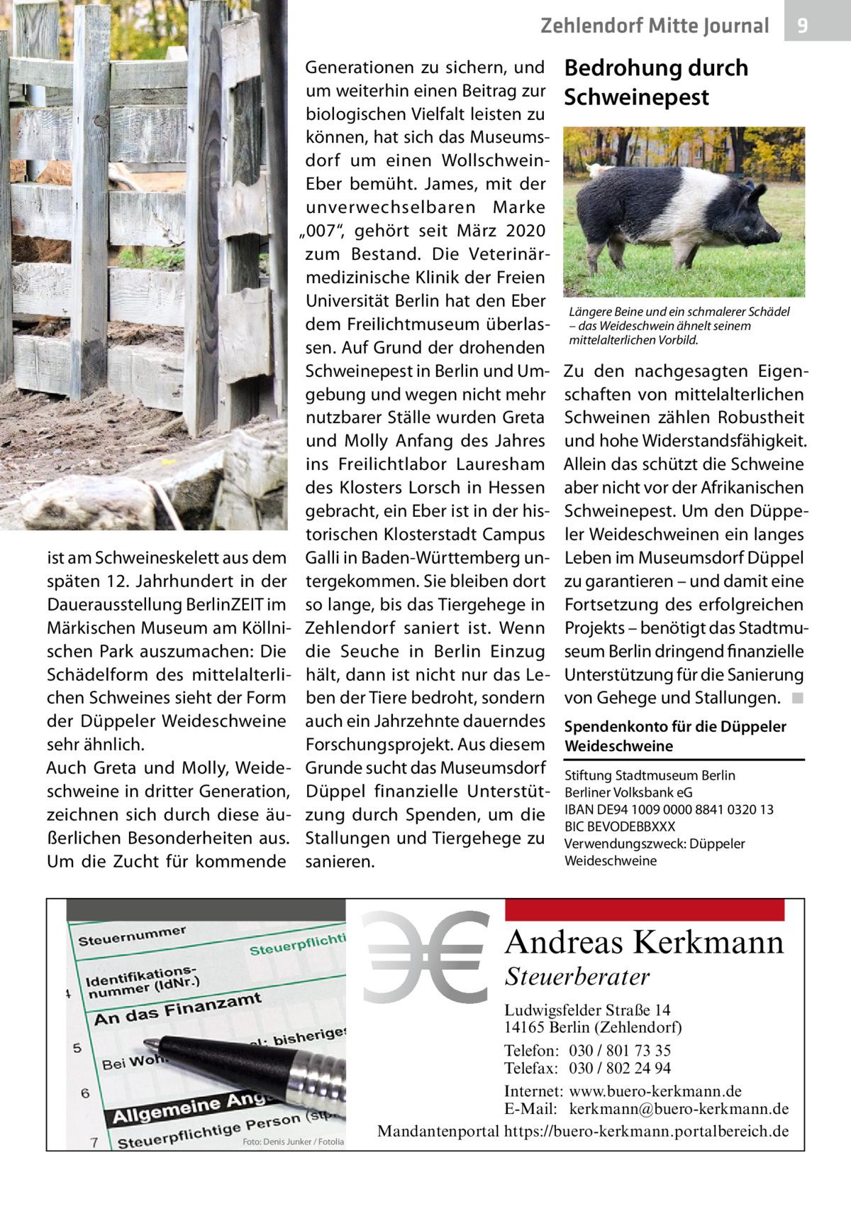 """Zehlendorf Mitte Journal  ist am Schweineskelett aus dem späten 12. Jahrhundert in der Dauerausstellung BerlinZEIT im Märkischen Museum am Köllnischen Park auszumachen: Die Schädelform des mittelalterlichen Schweines sieht der Form der Düppeler Weideschweine sehr ähnlich. Auch Greta und Molly, Weideschweine in dritter Generation, zeichnen sich durch diese äußerlichen Besonderheiten aus. Um die Zucht für kommende  Generationen zu sichern, und um weiterhin einen Beitrag zur biologischen Vielfalt leisten zu können, hat sich das Museumsdorf um einen WollschweinEber bemüht. James, mit der unverwechselbaren Marke """"007"""", gehört seit März 2020 zum Bestand. Die Veterinärmedizinische Klinik der Freien Universität Berlin hat den Eber dem Freilichtmuseum überlassen. Auf Grund der drohenden Schweinepest in Berlin und Umgebung und wegen nicht mehr nutzbarer Ställe wurden Greta und Molly Anfang des Jahres ins Freilichtlabor Lauresham des Klosters Lorsch in Hessen gebracht, ein Eber ist in der historischen Klosterstadt Campus Galli in Baden-Württemberg untergekommen. Sie bleiben dort so lange, bis das Tiergehege in Zehlendorf saniert ist. Wenn die Seuche in Berlin Einzug hält, dann ist nicht nur das Leben der Tiere bedroht, sondern auch ein Jahrzehnte dauerndes Forschungsprojekt. Aus diesem Grunde sucht das Museumsdorf Düppel finanzielle Unterstützung durch Spenden, um die Stallungen und Tiergehege zu sanieren.  Bedrohung durch Schweinepest  Längere Beine und ein schmalerer Schädel – das Weideschwein ähnelt seinem mittelalterlichen Vorbild.  Zu den nachgesagten Eigenschaften von mittelalterlichen Schweinen zählen Robustheit und hohe Widerstandsfähigkeit. Allein das schützt die Schweine aber nicht vor der Afrikanischen Schweinepest. Um den Düppeler Weideschweinen ein langes Leben im Museumsdorf Düppel zu garantieren – und damit eine Fortsetzung des erfolgreichen Projekts – benötigt das Stadtmuseum Berlin dringend finanzielle Unterstützung für die Sanierung von Gehege und Stallungen."""