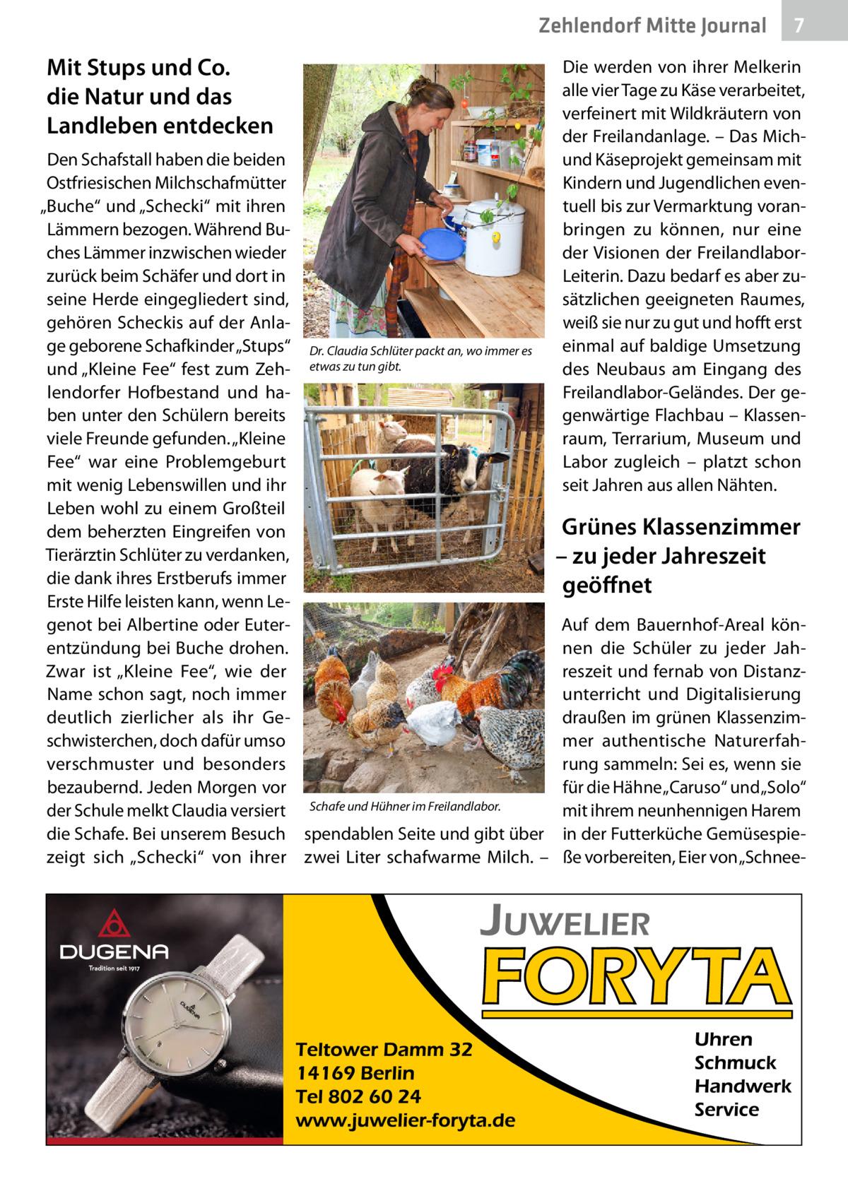 """Zehlendorf Mitte Gesundheit Journal  Mit Stups und Co. die Natur und das Landleben entdecken Den Schafstall haben die beiden Ostfriesischen Milchschafmütter """"Buche"""" und """"Schecki"""" mit ihren Lämmern bezogen. Während Buches Lämmer inzwischen wieder zurück beim Schäfer und dort in seine Herde eingegliedert sind, gehören Scheckis auf der Anlage geborene Schafkinder """"Stups"""" Dr.Claudia Schlüter packt an, wo immer es und """"Kleine Fee"""" fest zum Zeh- etwas zu tun gibt. lendorfer Hofbestand und haben unter den Schülern bereits viele Freunde gefunden. """"Kleine Fee"""" war eine Problemgeburt mit wenig Lebenswillen und ihr Leben wohl zu einem Großteil dem beherzten Eingreifen von Tierärztin Schlüter zu verdanken, die dank ihres Erstberufs immer Erste Hilfe leisten kann, wenn Legenot bei Albertine oder Euterentzündung bei Buche drohen. Zwar ist """"Kleine Fee"""", wie der Name schon sagt, noch immer deutlich zierlicher als ihr Geschwisterchen, doch dafür umso verschmuster und besonders bezaubernd. Jeden Morgen vor der Schule melkt Claudia versiert Schafe und Hühner im Freilandlabor. die Schafe. Bei unserem Besuch spendablen Seite und gibt über zeigt sich """"Schecki"""" von ihrer zwei Liter schafwarme Milch. –  7  Die werden von ihrer Melkerin alle vier Tage zu Käse verarbeitet, verfeinert mit Wildkräutern von der Freilandanlage. – Das Michund Käseprojekt gemeinsam mit Kindern und Jugendlichen eventuell bis zur Vermarktung voranbringen zu können, nur eine der Visionen der FreilandlaborLeiterin. Dazu bedarf es aber zusätzlichen geeigneten Raumes, weiß sie nur zu gut und hofft erst einmal auf baldige Umsetzung des Neubaus am Eingang des Freilandlabor-Geländes. Der gegenwärtige Flachbau – Klassenraum, Terrarium, Museum und Labor zugleich – platzt schon seit Jahren aus allen Nähten.  Grünes Klassenzimmer – zujeder Jahreszeit geöffnet Auf dem Bauernhof-Areal können die Schüler zu jeder Jahreszeit und fernab von Distanzunterricht und Digitalisierung draußen im grünen Klassenzimmer authentische Naturerfa"""