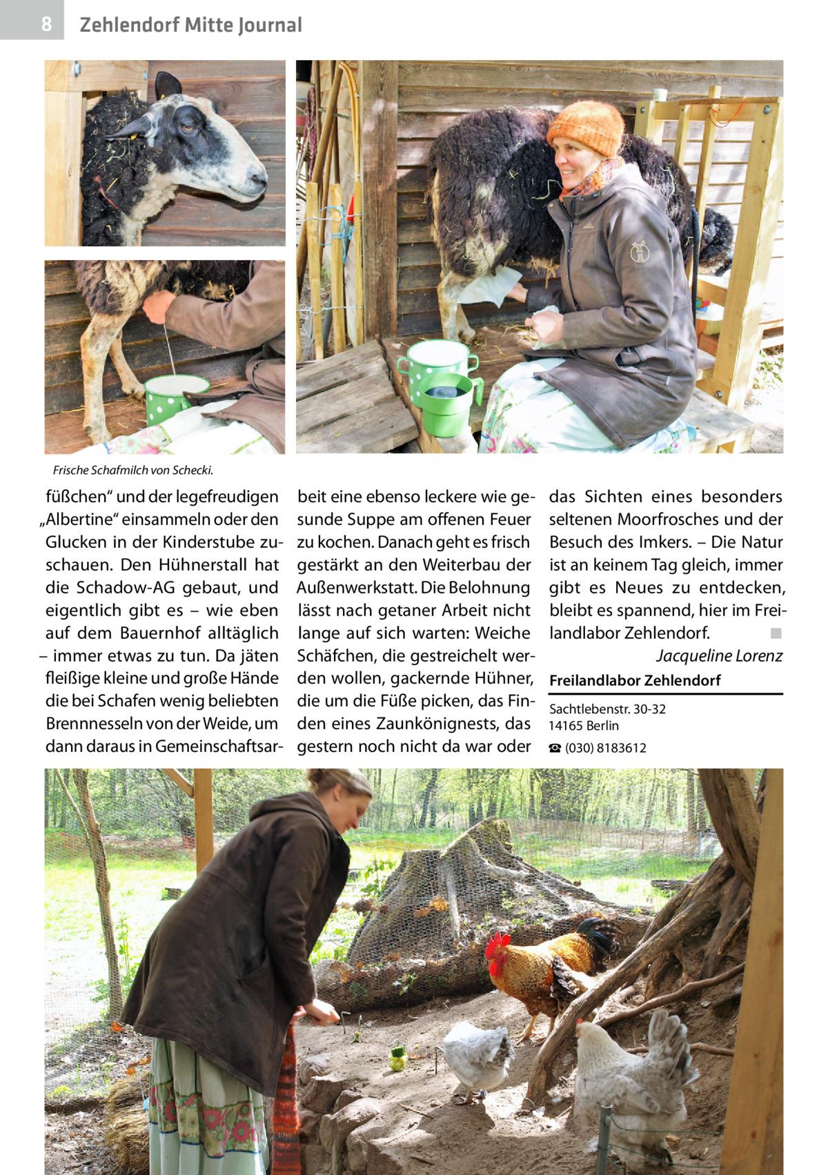 """8  Zehlendorf Mitte Journal  Frische Schafmilch von Schecki.  füßchen"""" und der legefreudigen """"Albertine"""" einsammeln oder den Glucken in der Kinderstube zuschauen. Den Hühnerstall hat die Schadow-AG gebaut, und eigentlich gibt es – wie eben auf dem Bauernhof alltäglich – immer etwas zu tun. Da jäten fleißige kleine und große Hände die bei Schafen wenig beliebten Brennnesseln von der Weide, um dann daraus in Gemeinschaftsar beit eine ebenso leckere wie gesunde Suppe am offenen Feuer zu kochen. Danach geht es frisch gestärkt an den Weiterbau der Außenwerkstatt. Die Belohnung lässt nach getaner Arbeit nicht lange auf sich warten: Weiche Schäfchen, die gestreichelt werden wollen, gackernde Hühner, die um die Füße picken, das Finden eines Zaunkönignests, das gestern noch nicht da war oder  das Sichten eines besonders seltenen Moorfrosches und der Besuch des Imkers. – Die Natur ist an keinem Tag gleich, immer gibt es Neues zu entdecken, bleibt es spannend, hier im Freilandlabor Zehlendorf.� ◾ � Jacqueline Lorenz Freilandlabor Zehlendorf Sachtlebenstr.30-32 14165Berlin ☎(030) 8183612"""